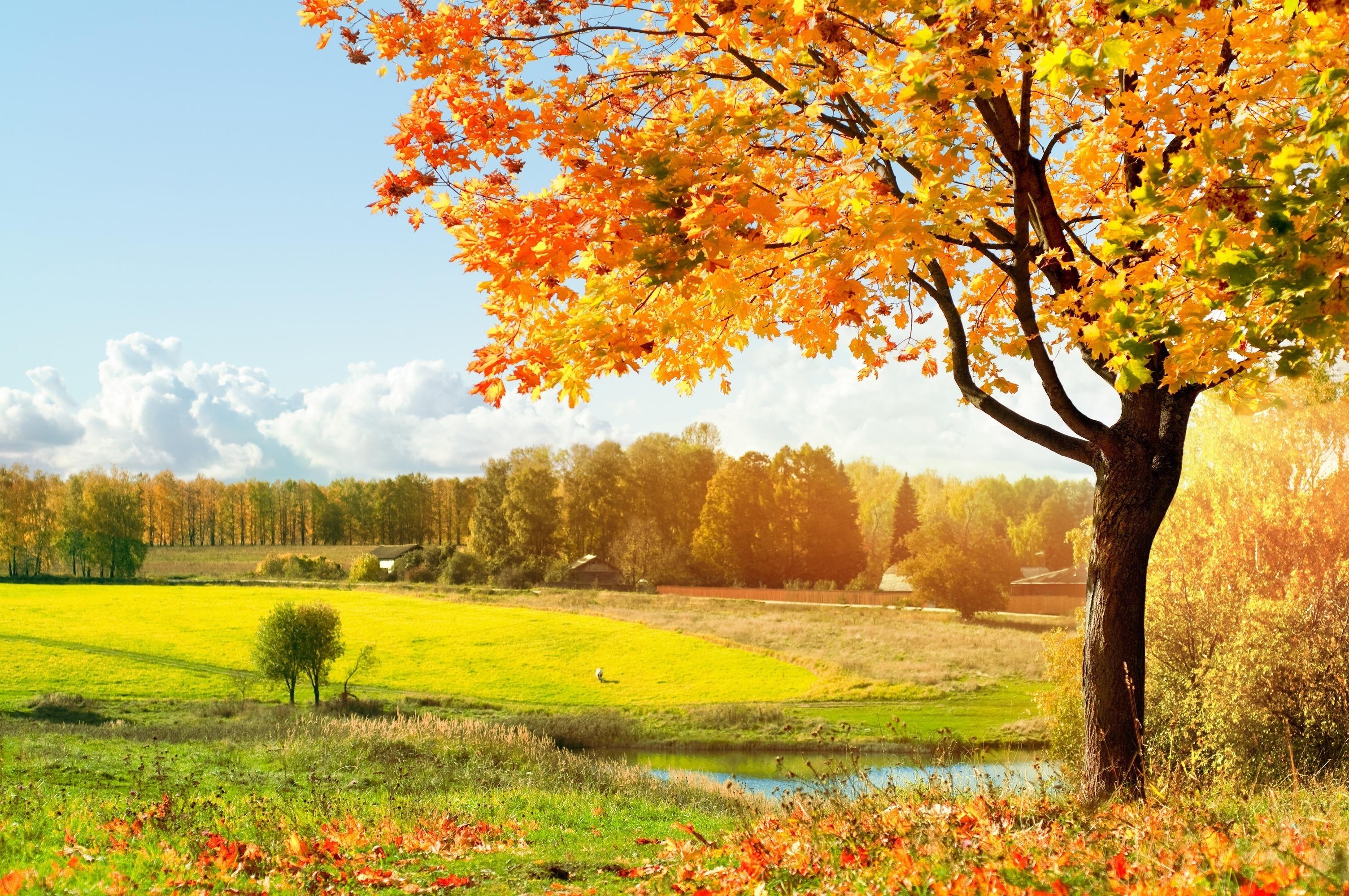 Открытки, осенний лес открытки