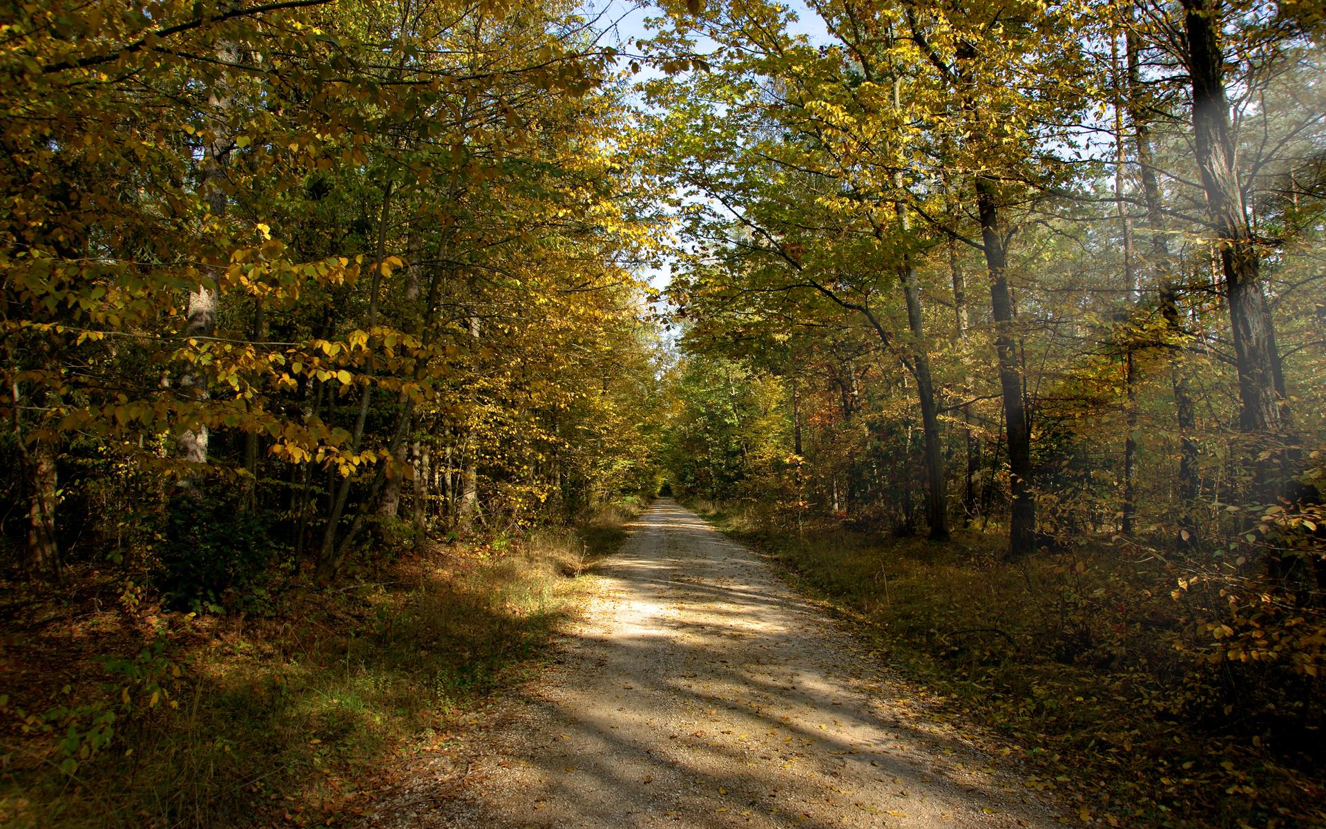 Осенняя дорога без смс