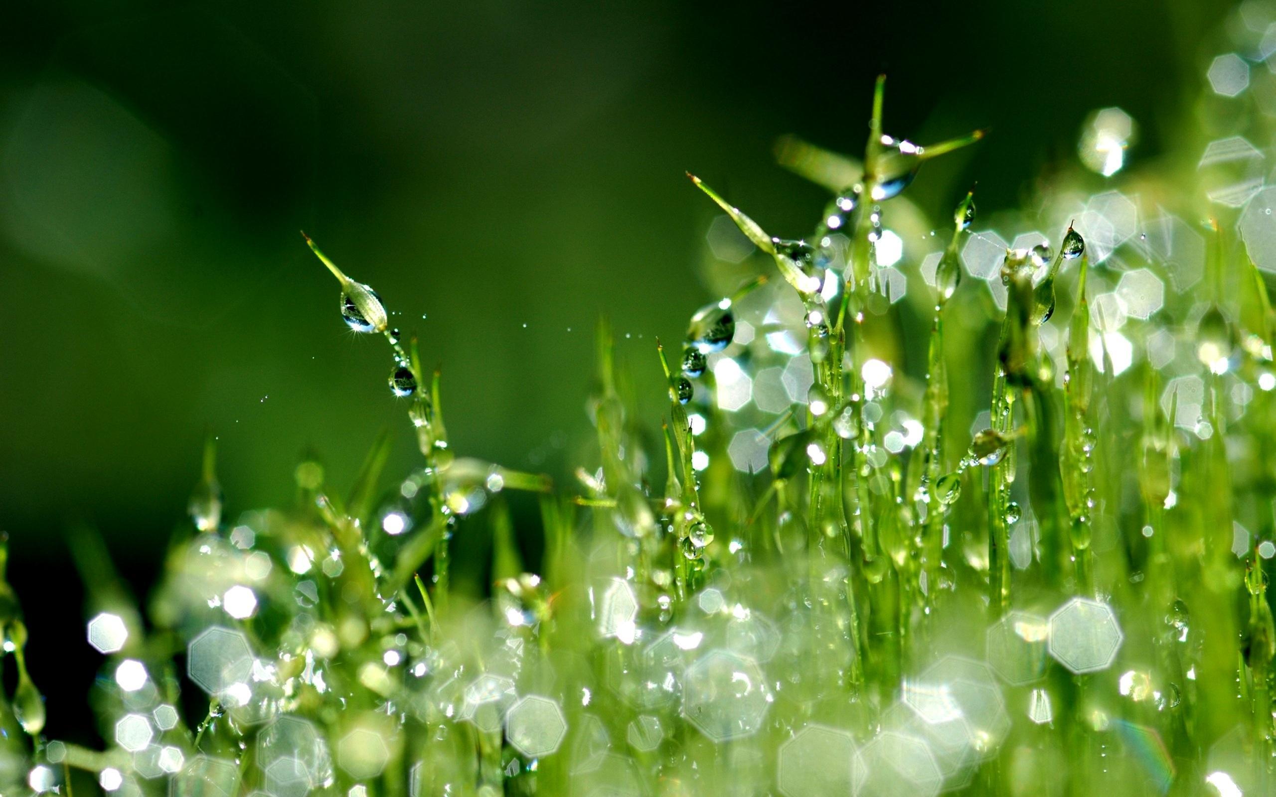 Трава макро съемка  № 3147945 бесплатно