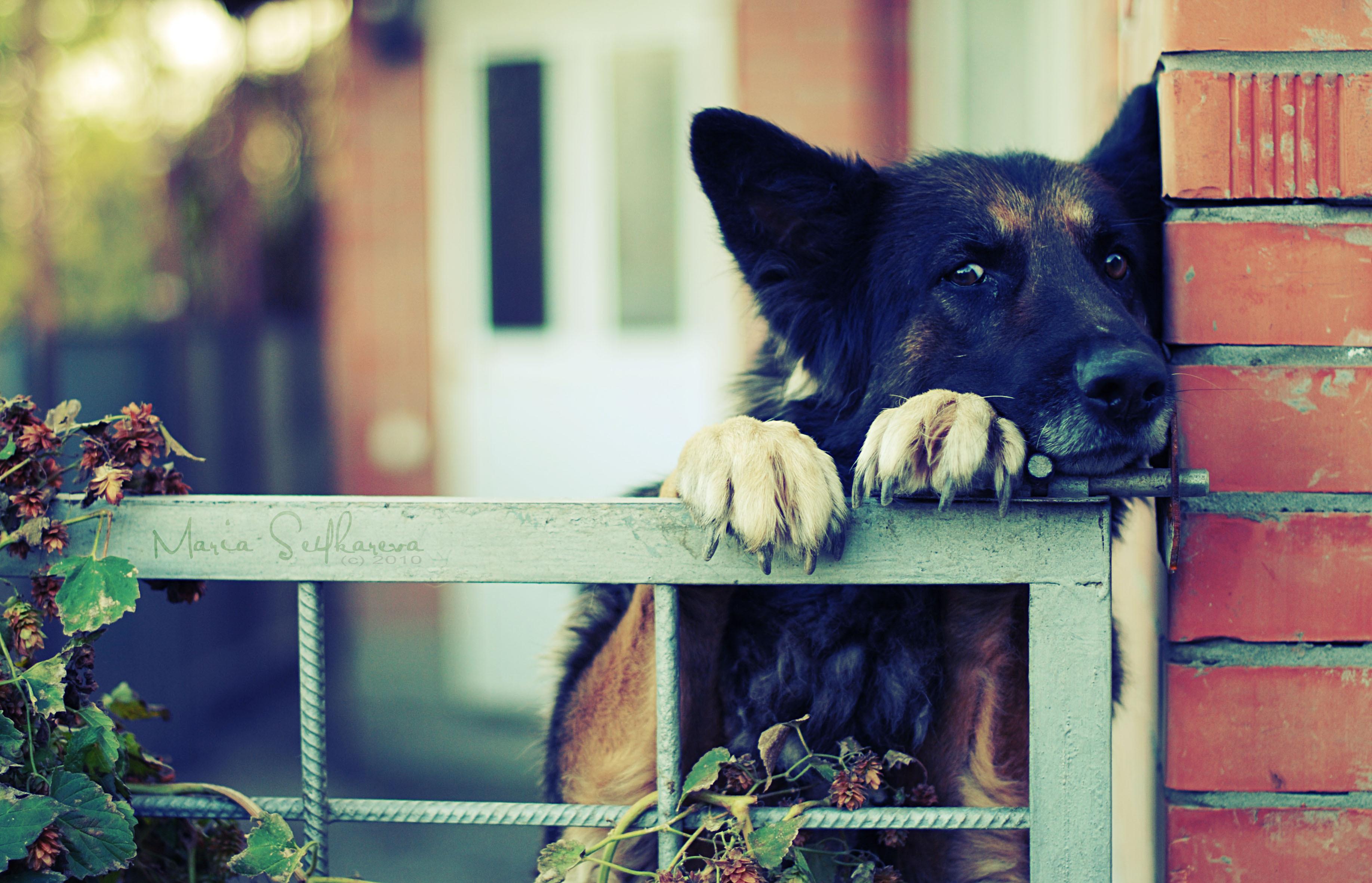 Собака на улице скачать