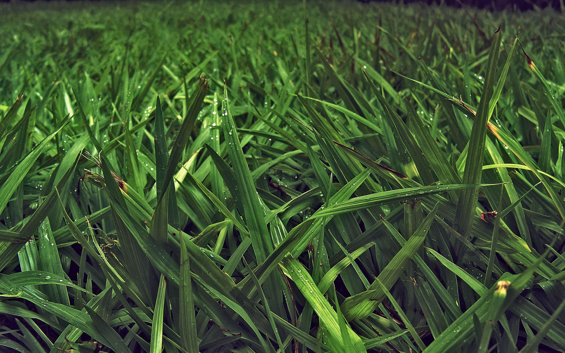 Тонкая трава без смс