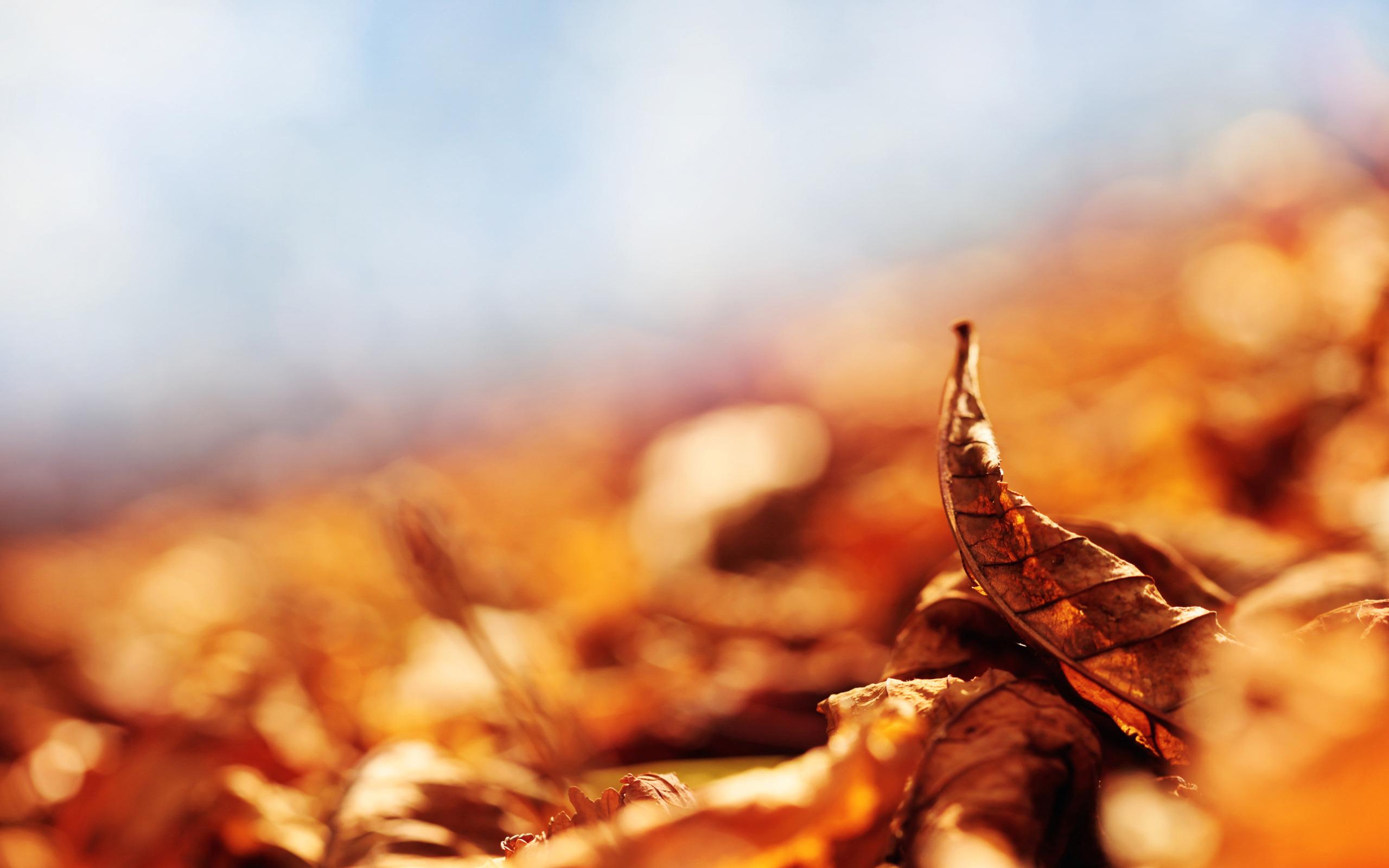 желтые листья бесплатно