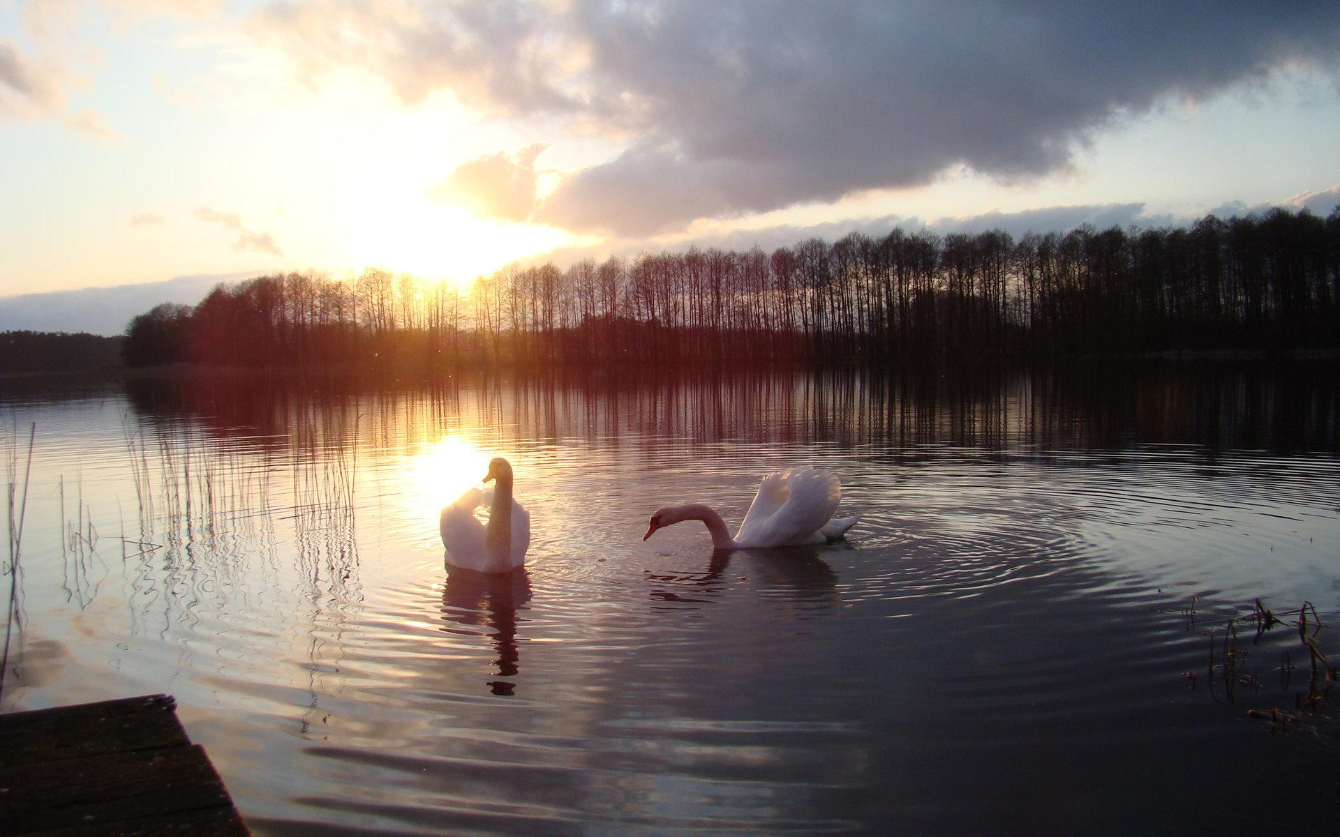 Пара на берегу горного озера  № 1609001  скачать