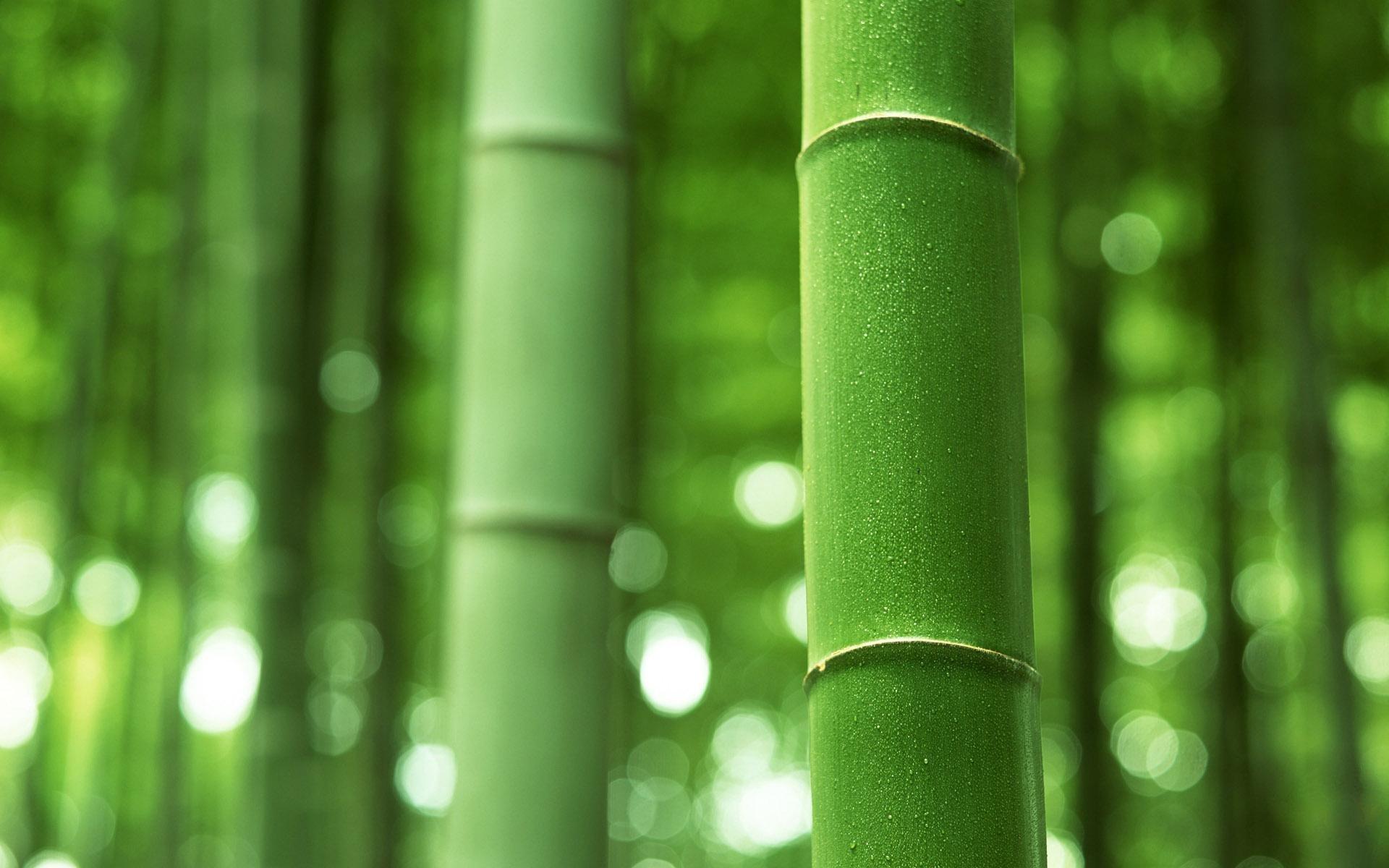 ПРЕСС-ТУР:  тұқым бақта банбук өседі