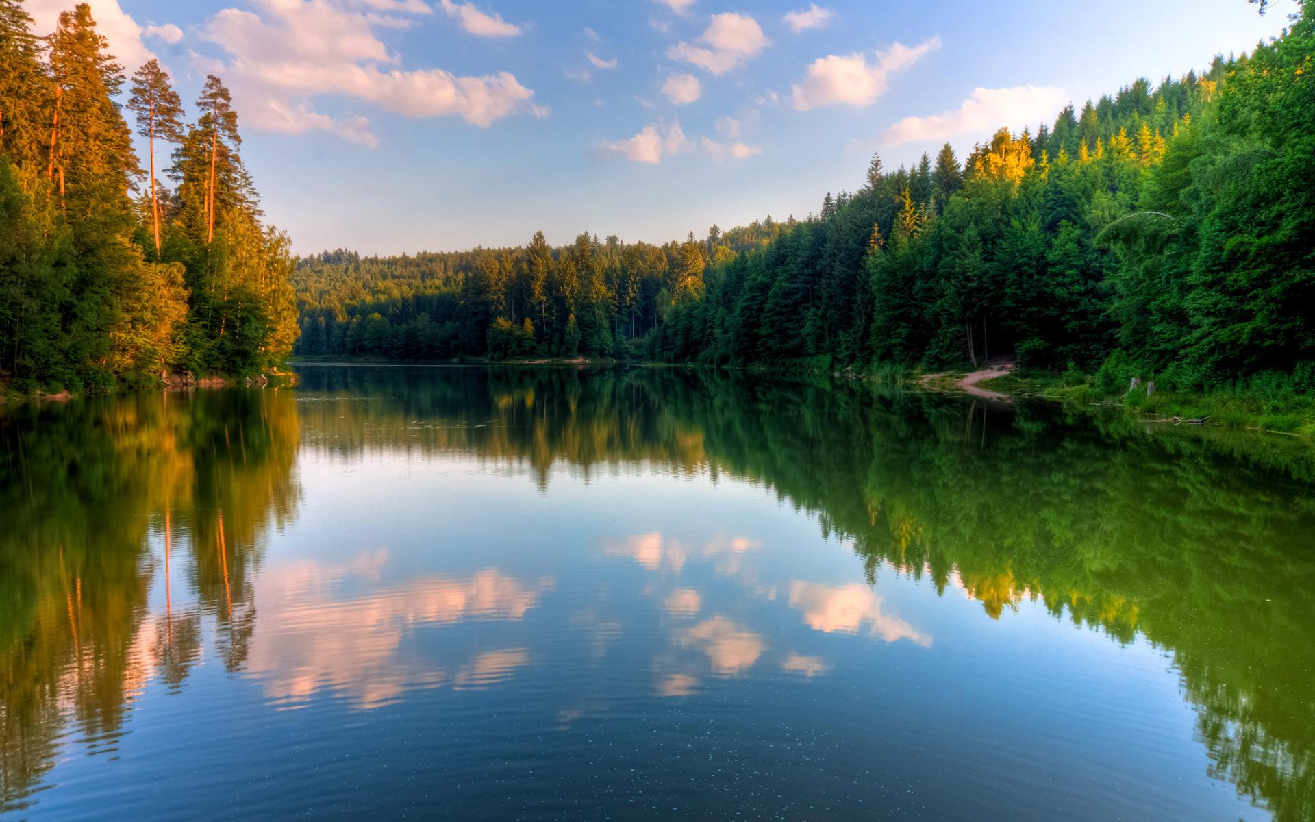Картинки лес и вода
