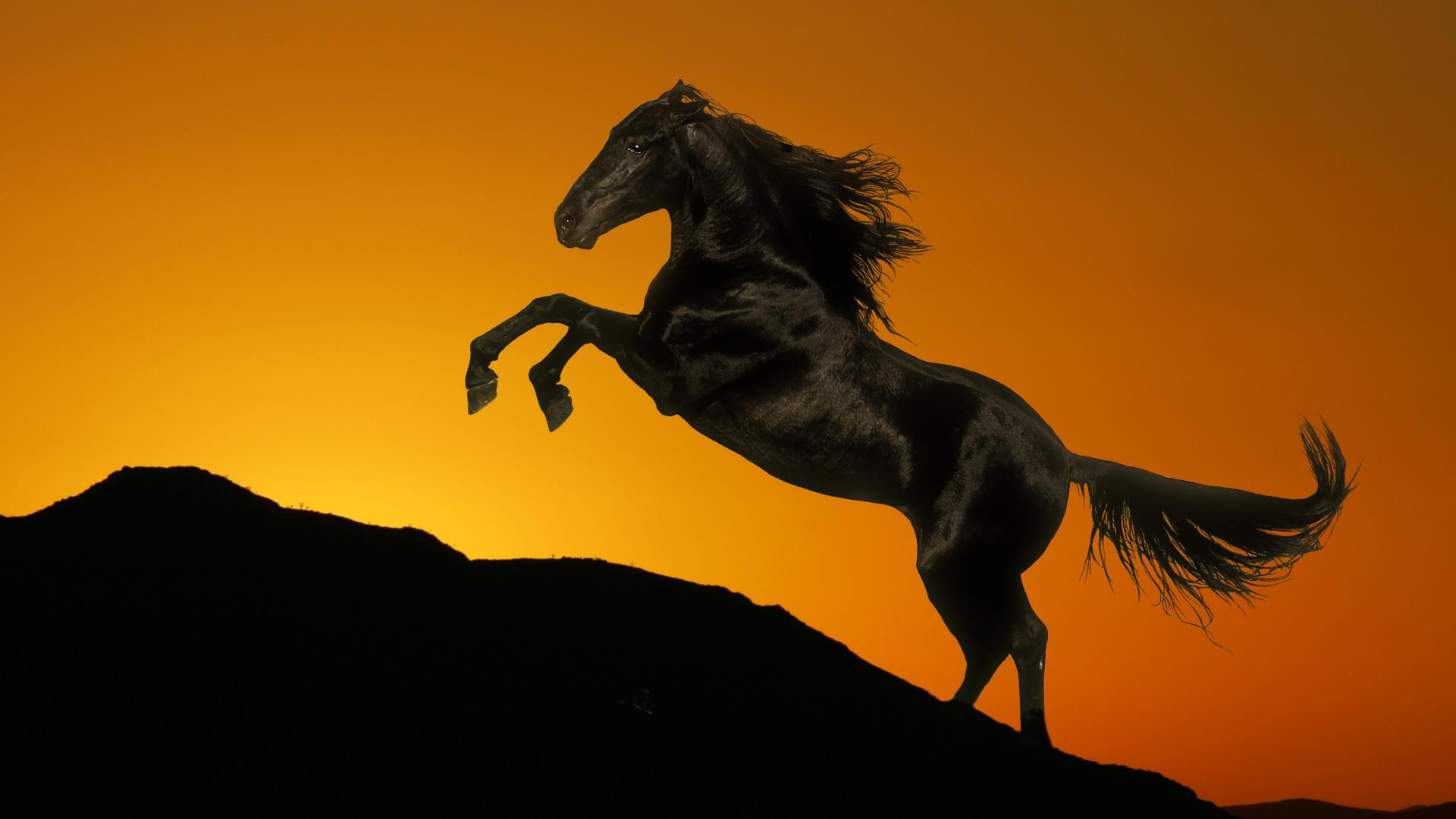 лошади тени ночь  № 359492  скачать