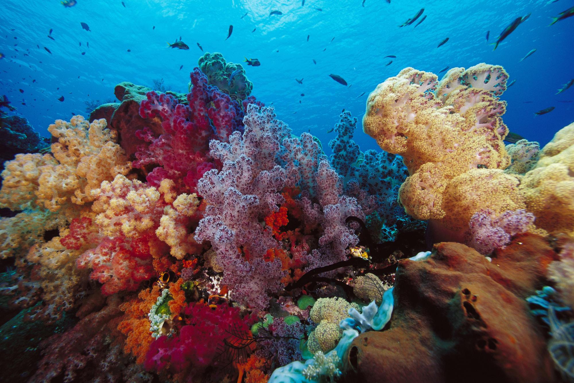 природа рыба море коралловый риф без смс