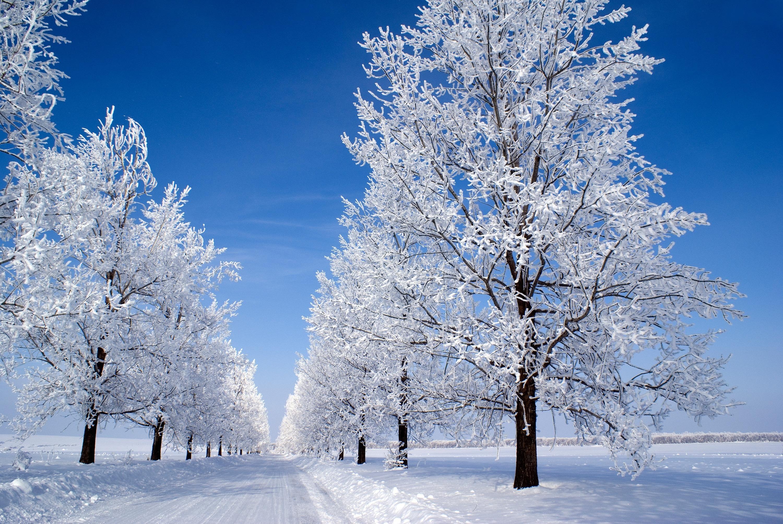 живые картинки на рабочий про зиму