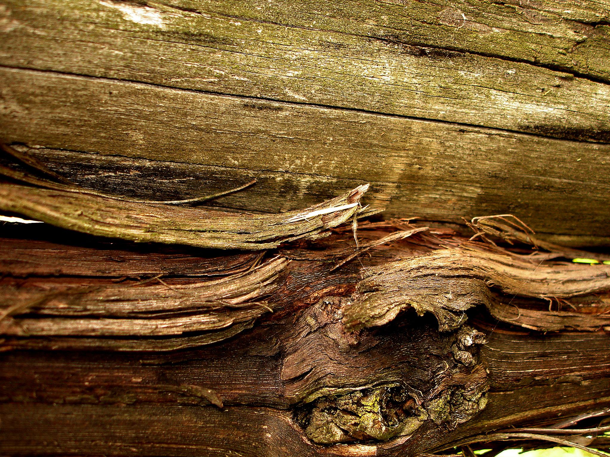 Срезанное дерево загрузить
