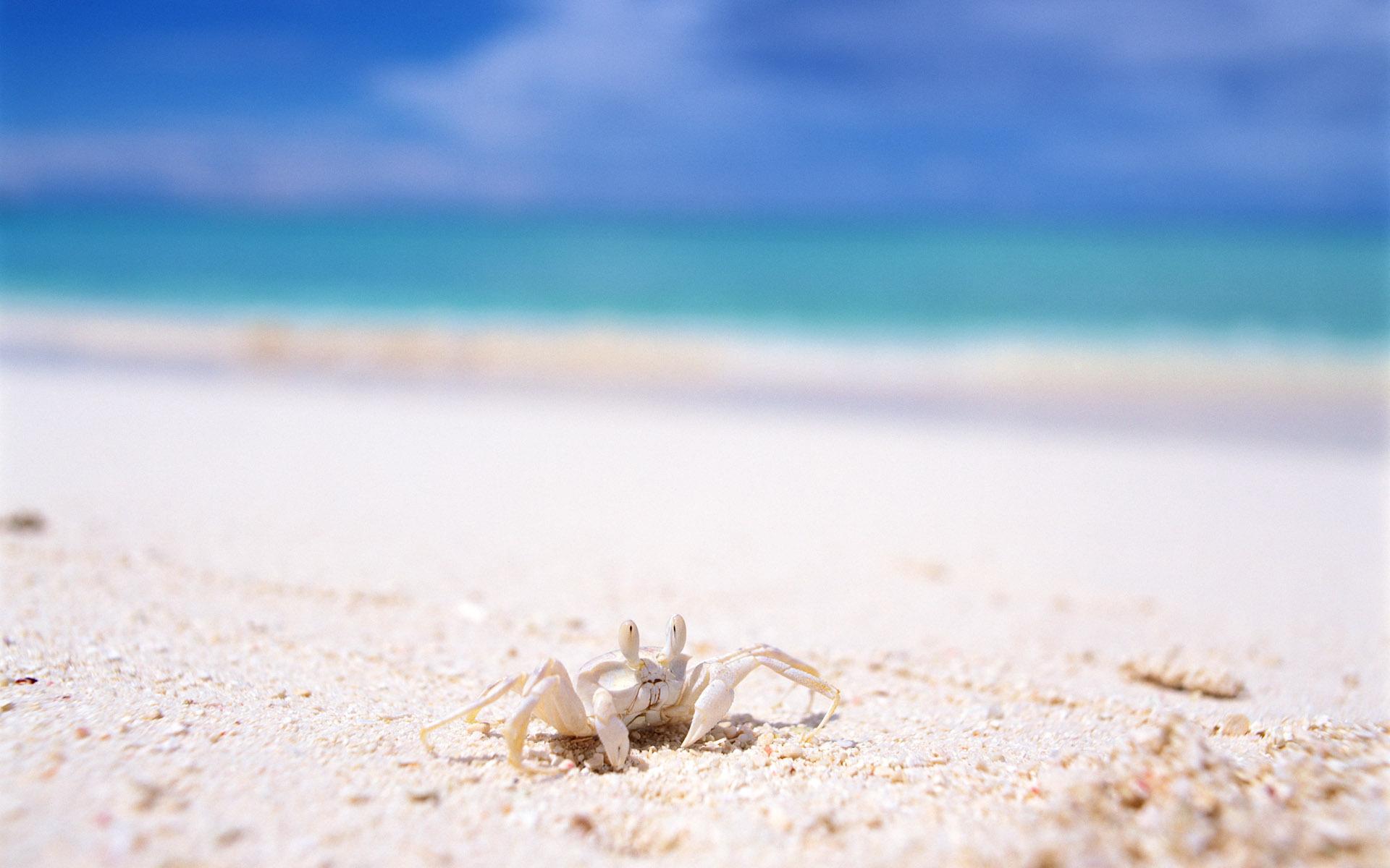 Краб на песке  № 96563 загрузить