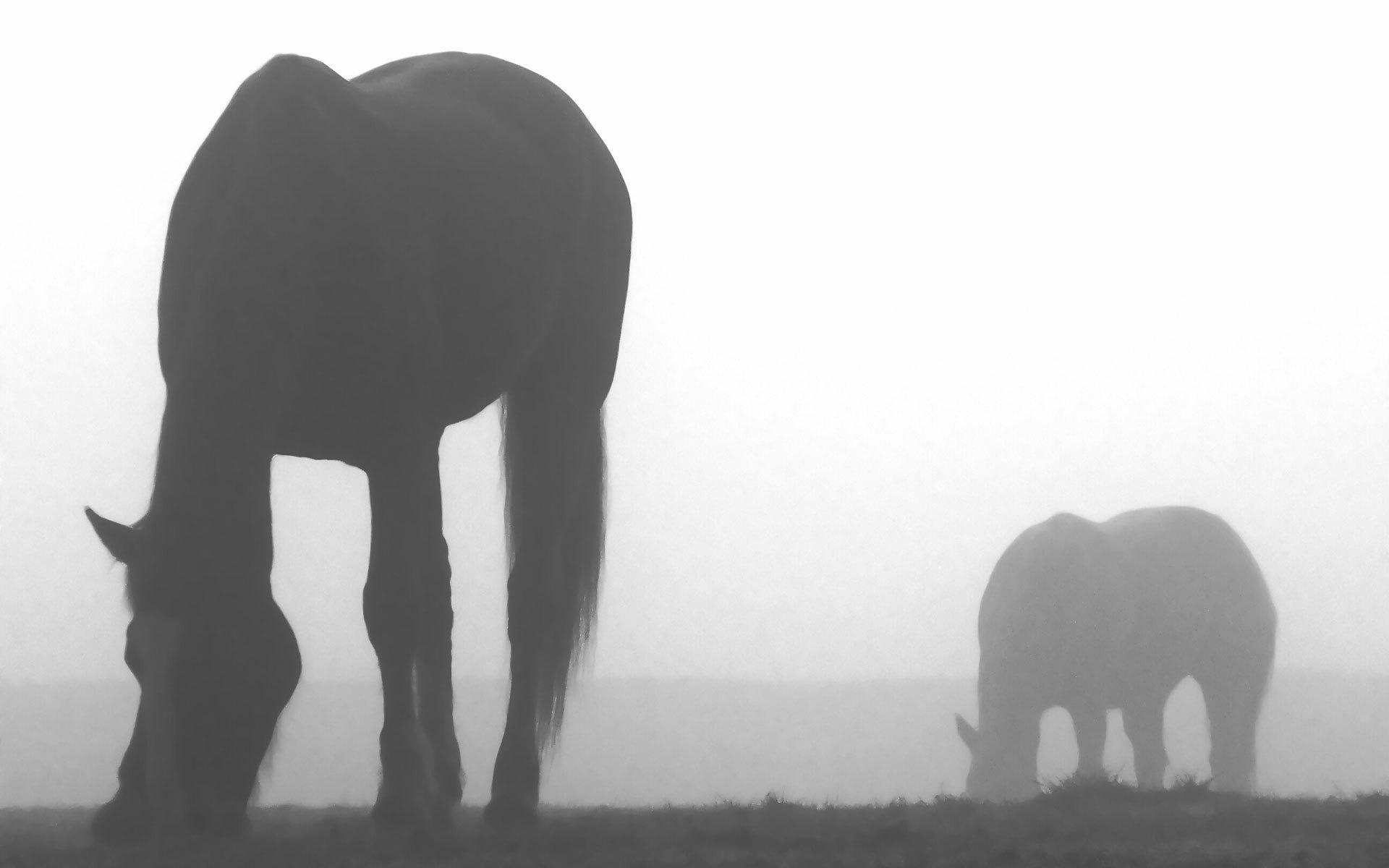 лошади тени ночь  № 359566 бесплатно