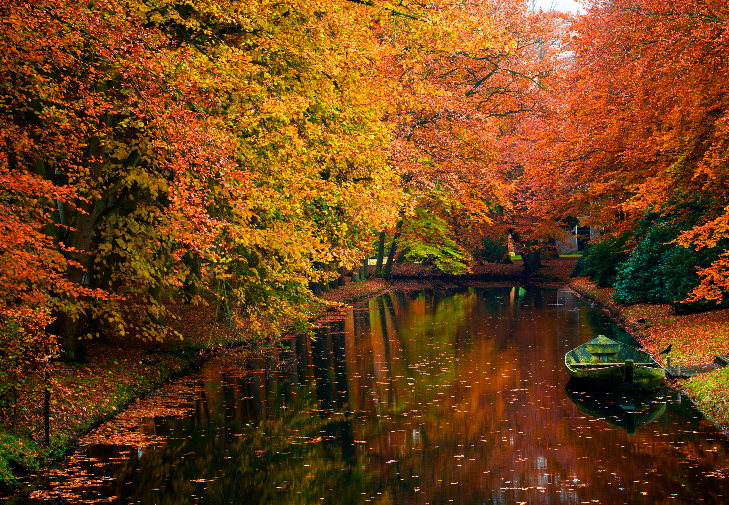 река осень деревья  № 3186412 бесплатно