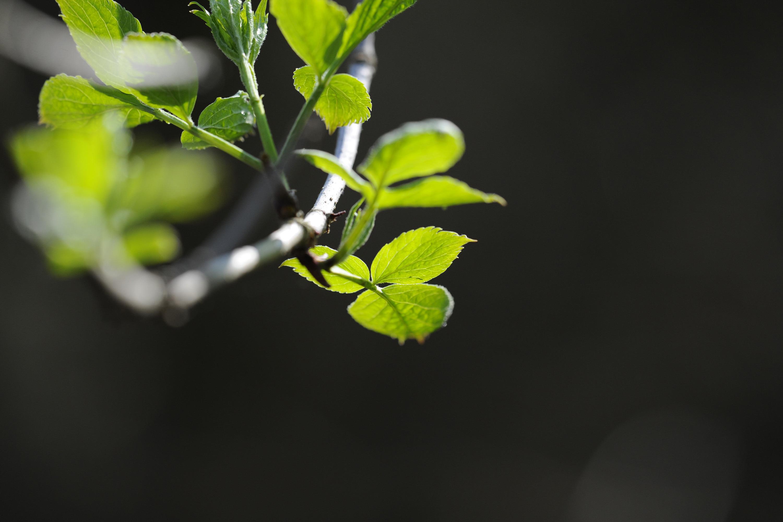 листья ветка забор палки скачать