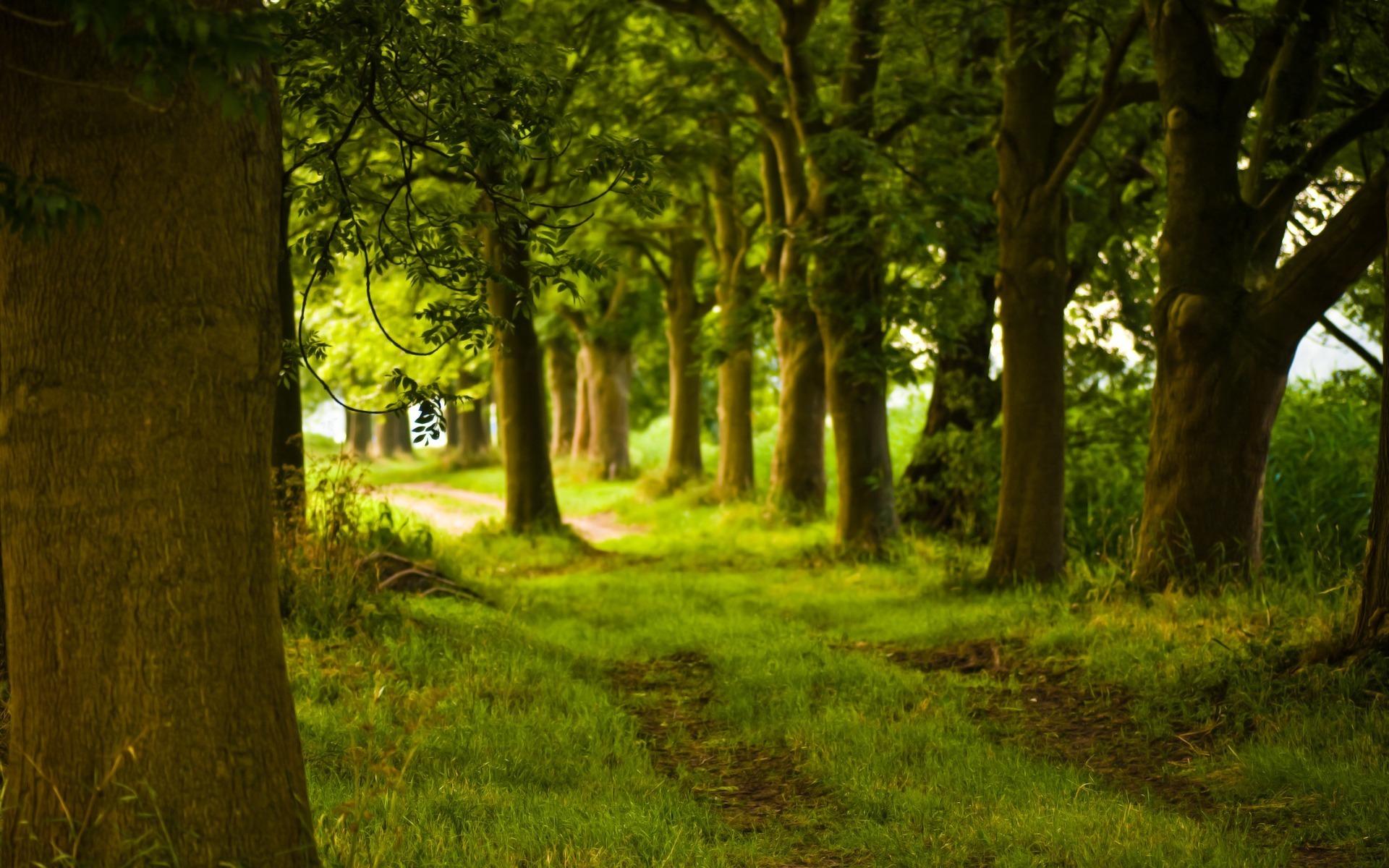 лучи лес дорога лето зелень rays forest road summer greens без смс