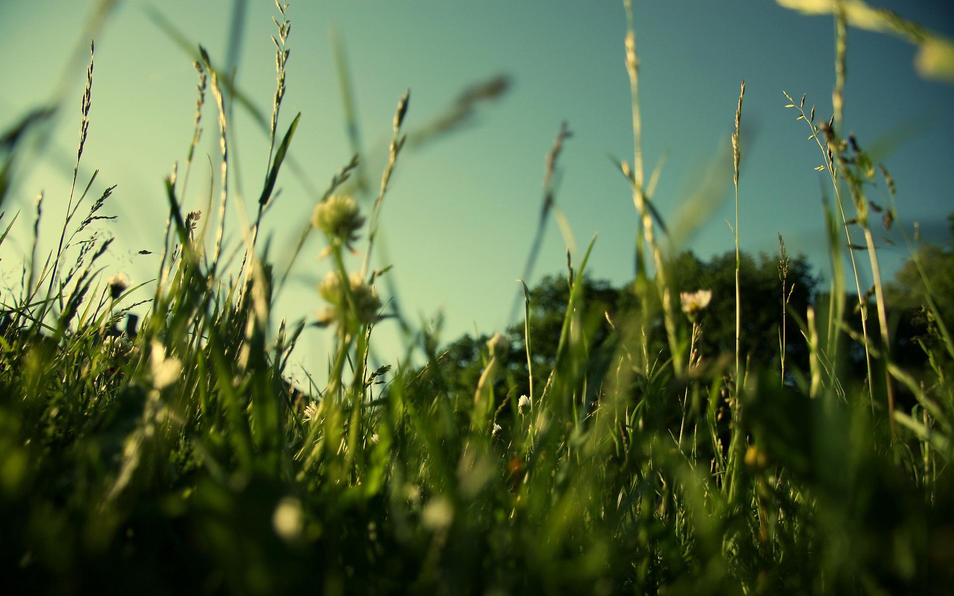 лужайка зелень трава фокус домик машинка бесплатно