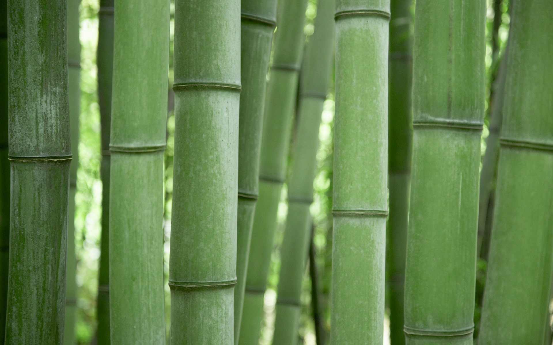 Bamboo dating website