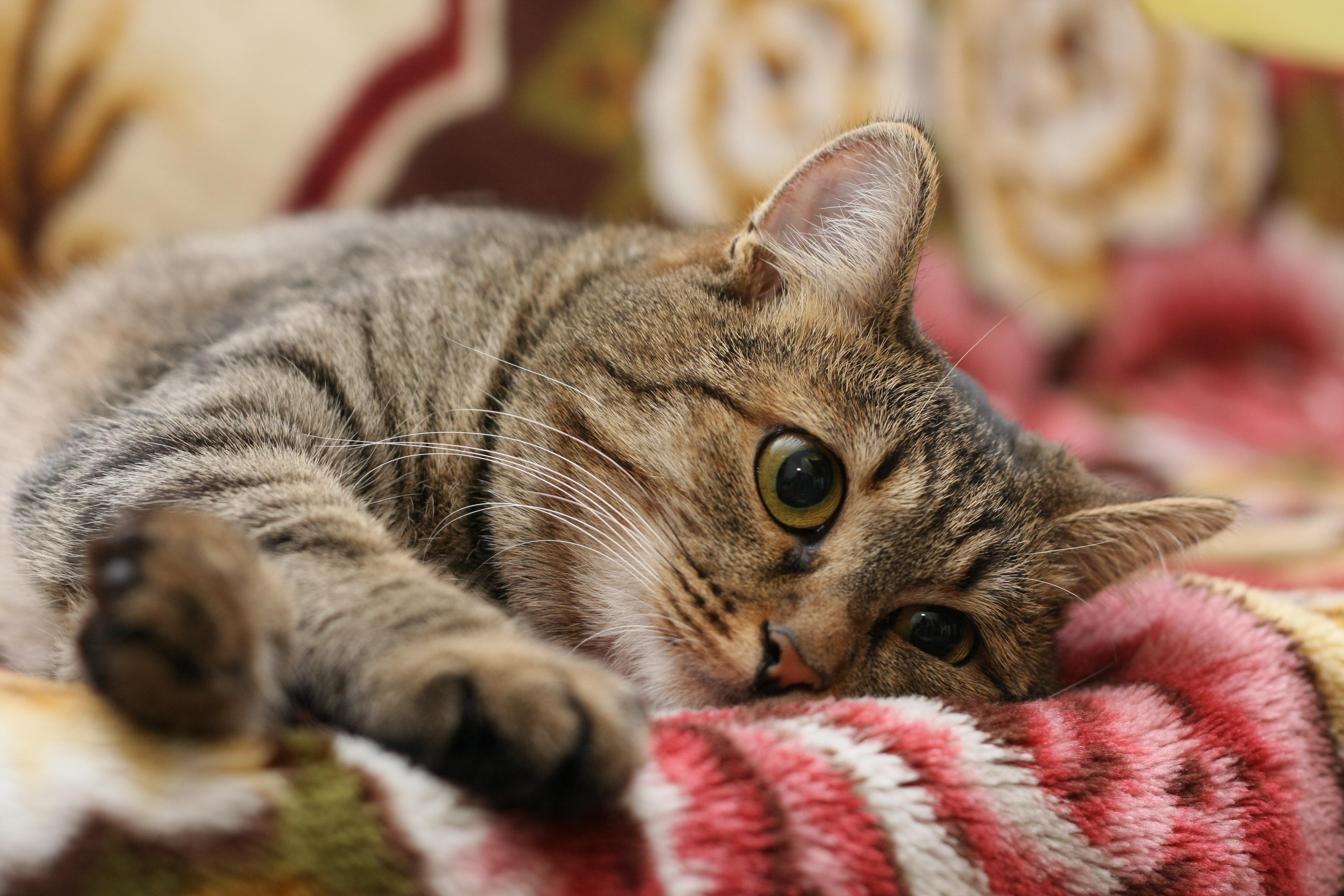 фото кошек с картинками обновление
