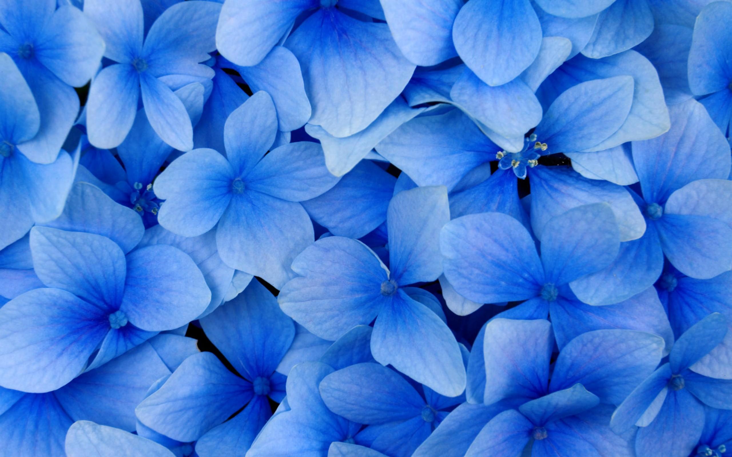 Белые и синие цветки скачать