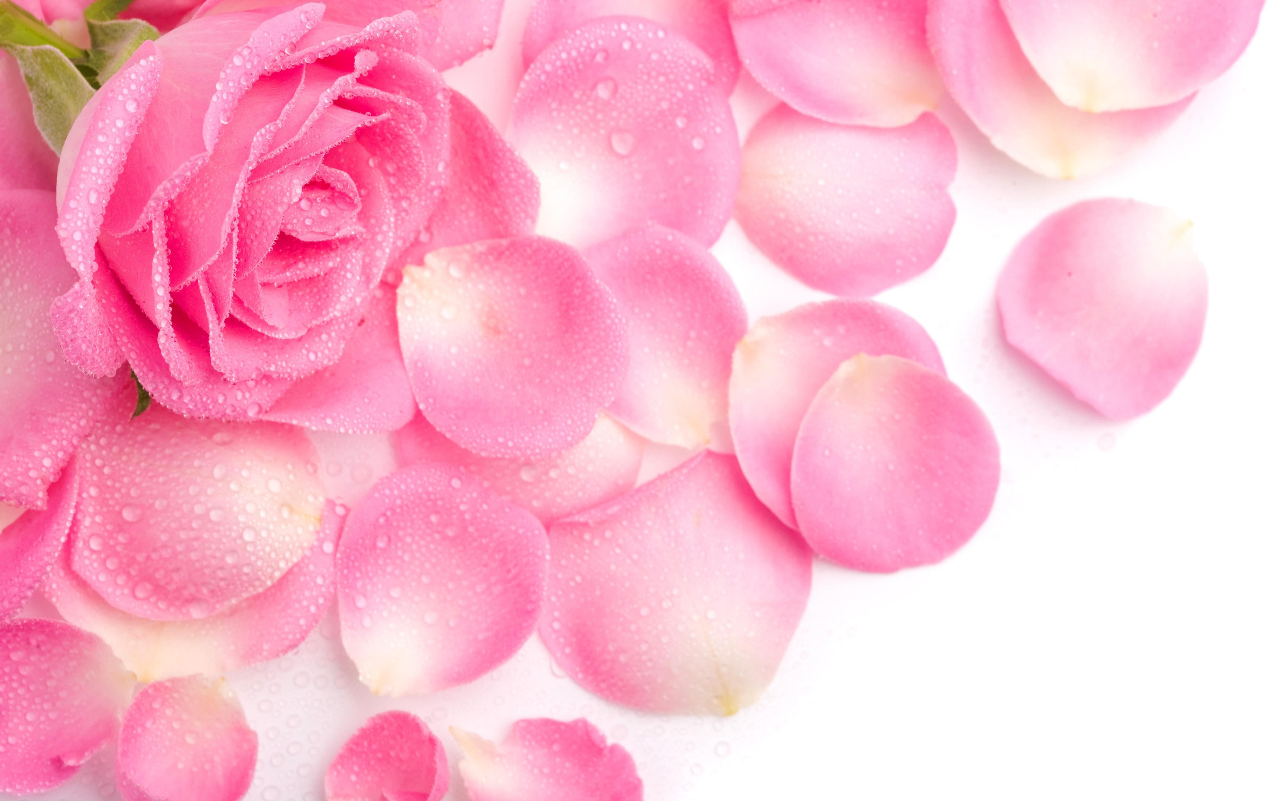 Картинки, открытка с днем рождения маме розы