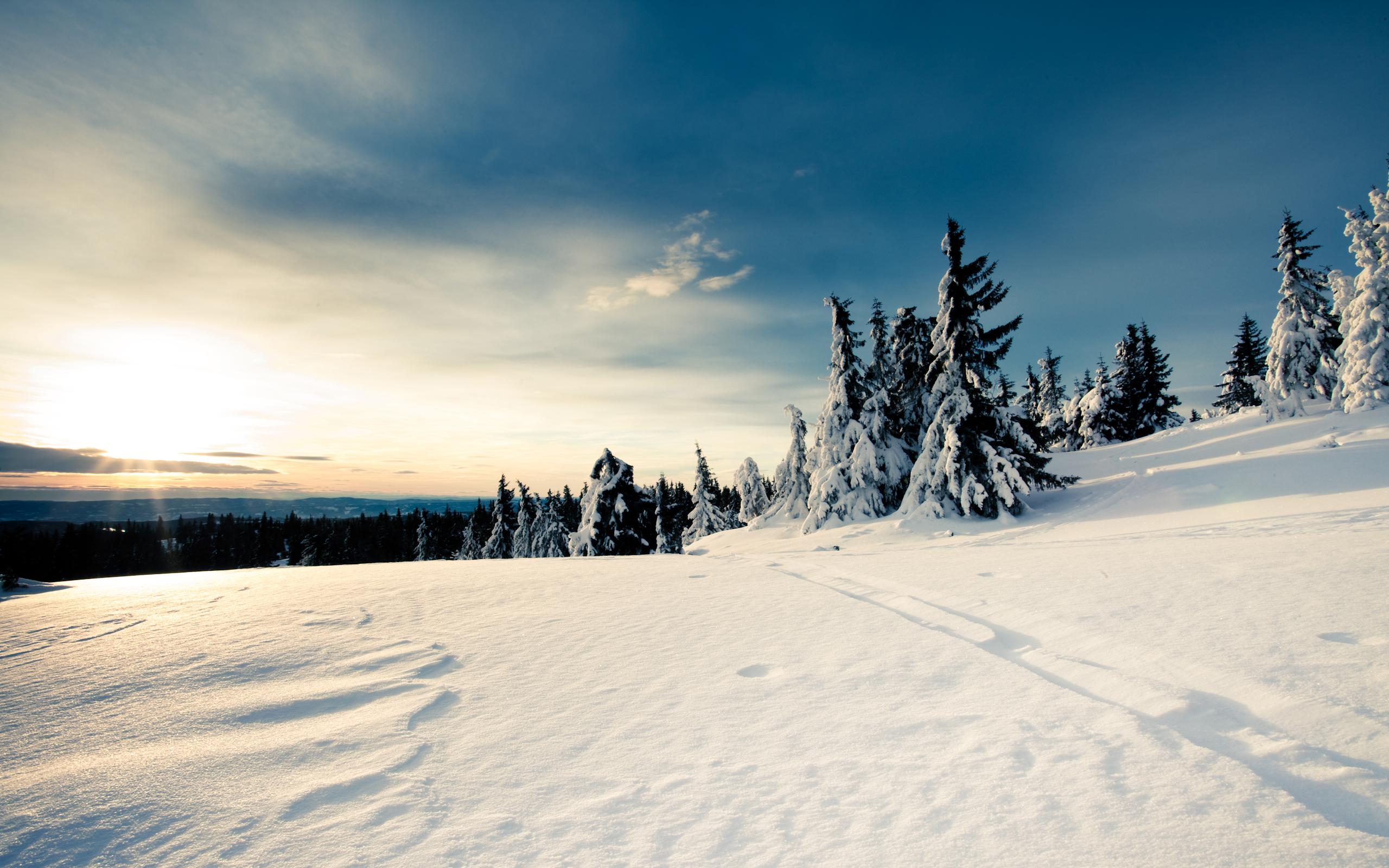 Дорога зимой снег ели небо без смс