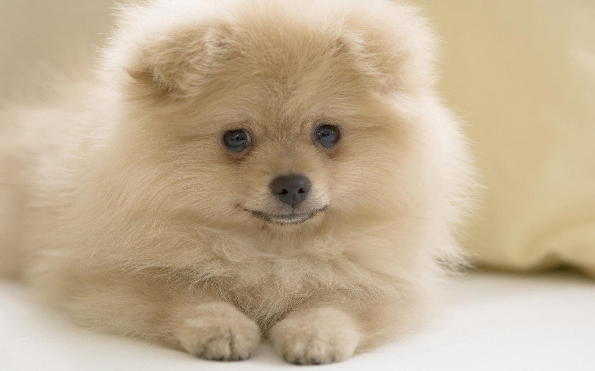 породы с все пушистых названиями собак фотографиями и