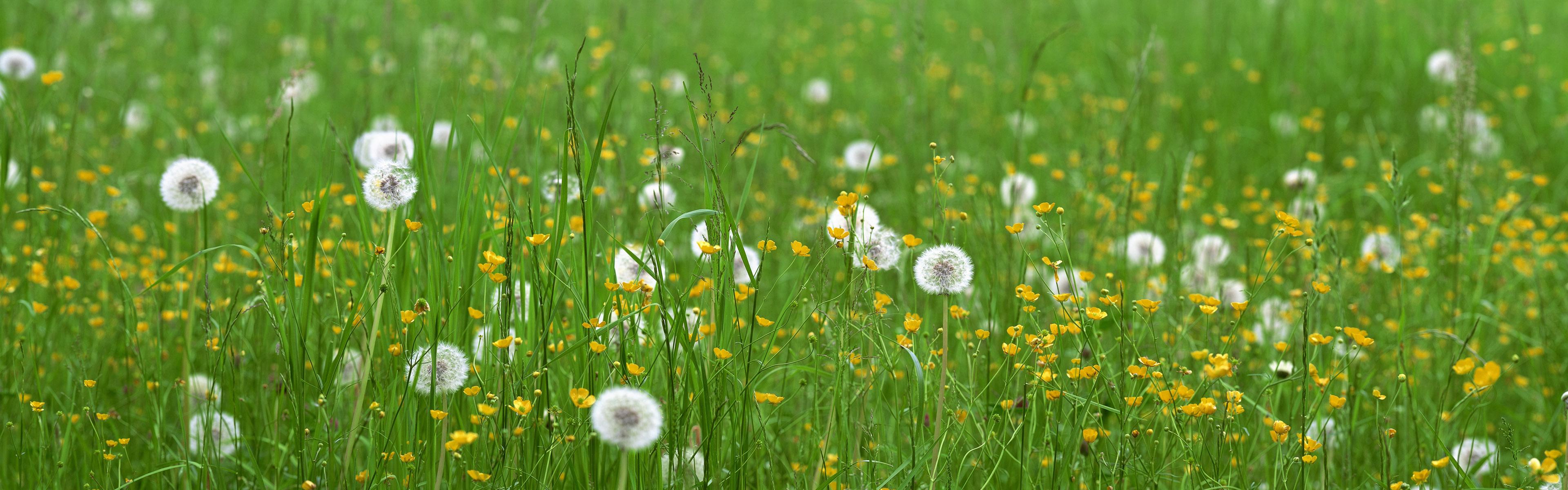 цветы трава без смс