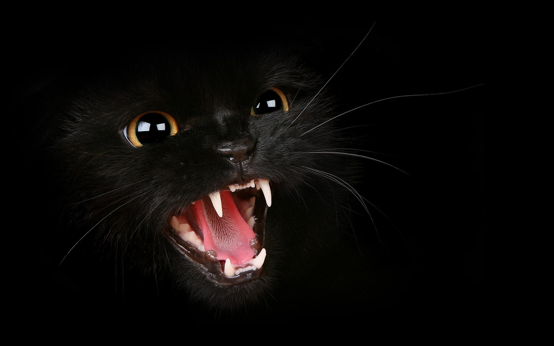 обои на рабочий стол черная кошка с зелеными глазами № 174223  скачать