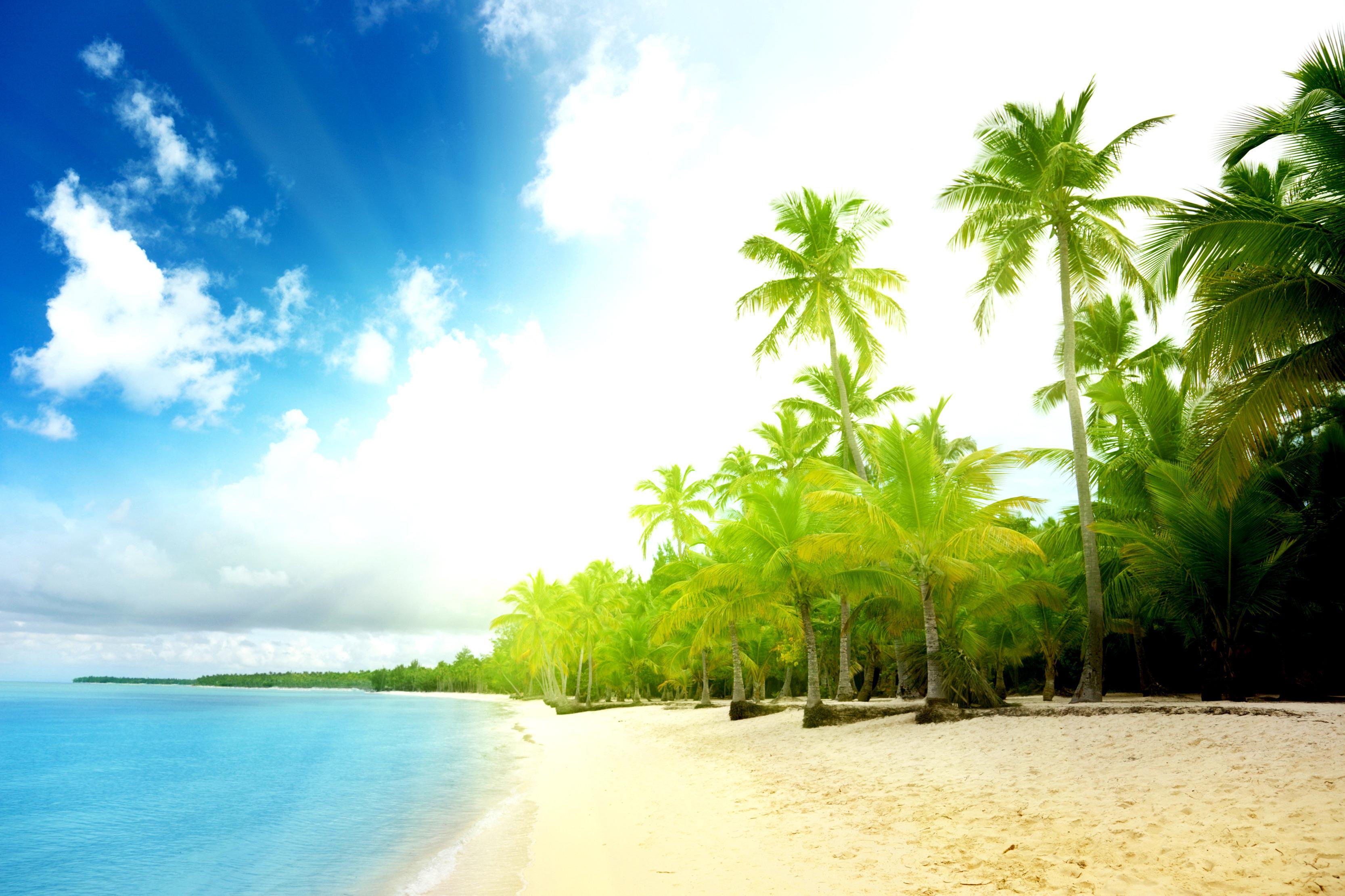 природа море облака деревья пляж скачать