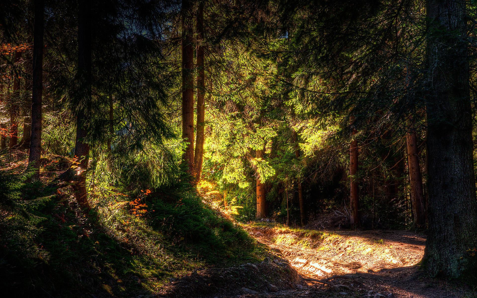 дремучий лес деревья без смс