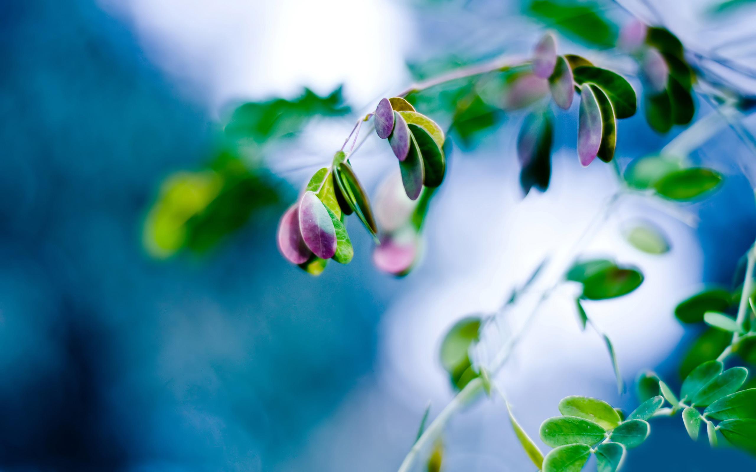 природа листья весна  № 3899980 без смс