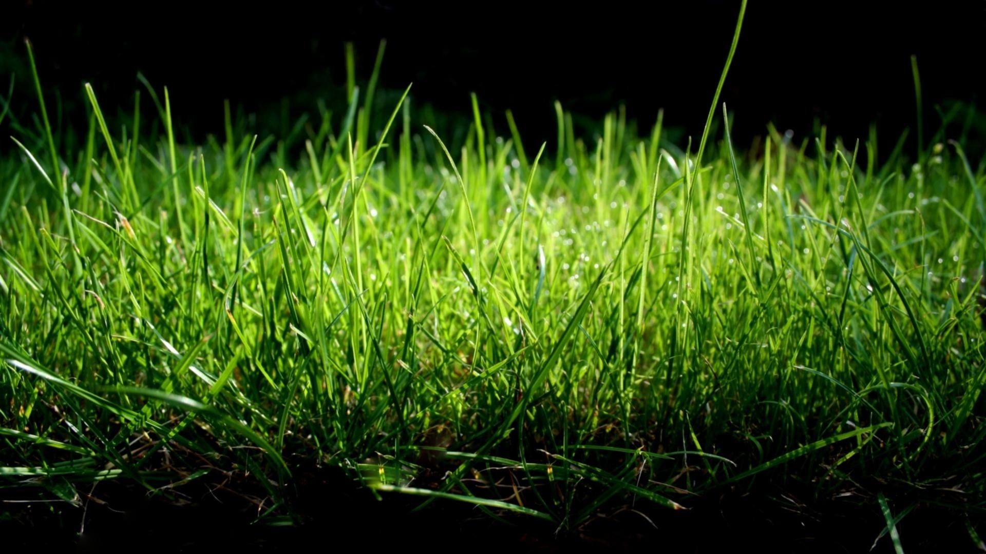 природа люди трава смотреть