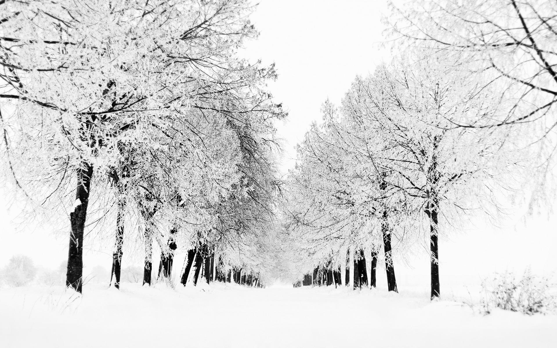 снежно-белая зима загрузить