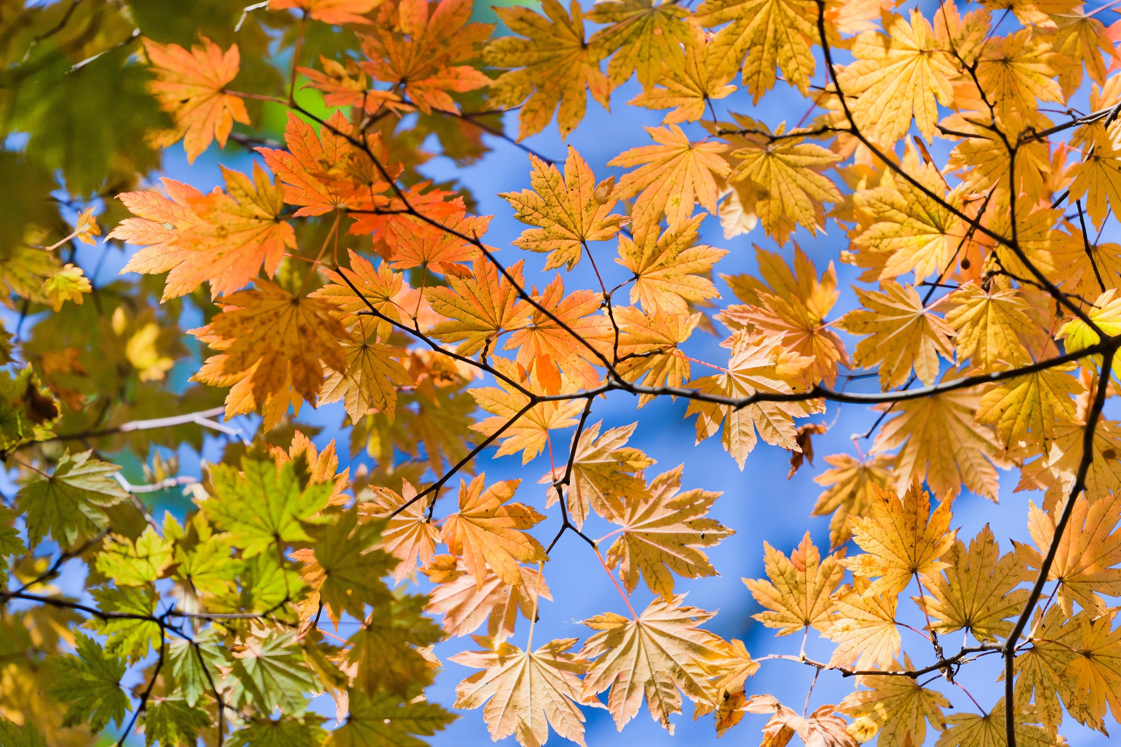 желтые листья загрузить
