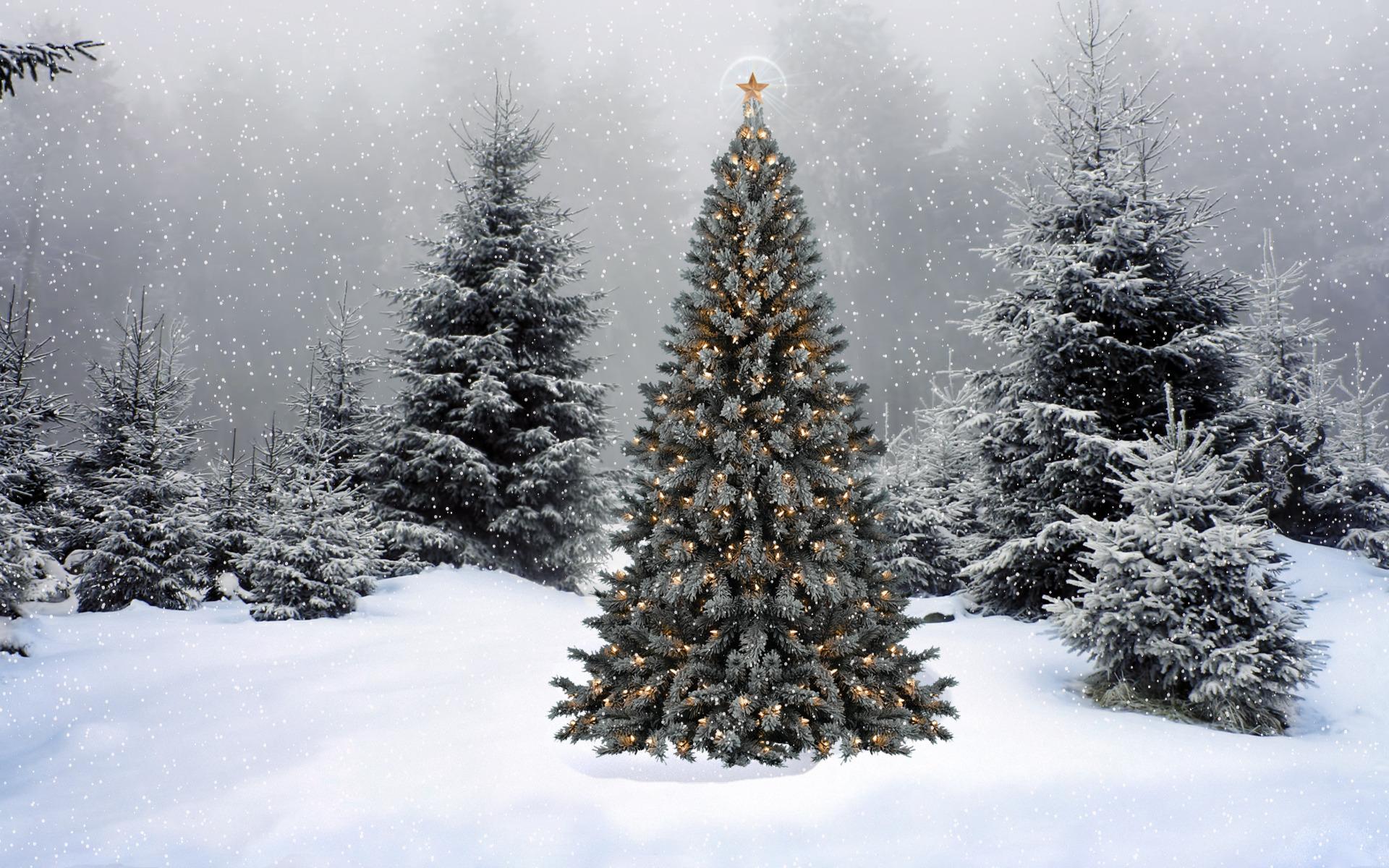 Спортивные танцы, картинки наряженная елка и снег