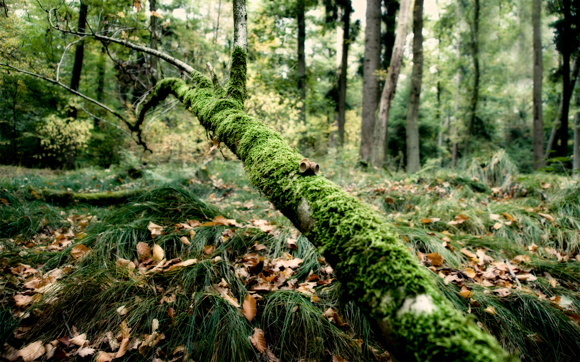 зелень лес деревья  № 1078786 бесплатно