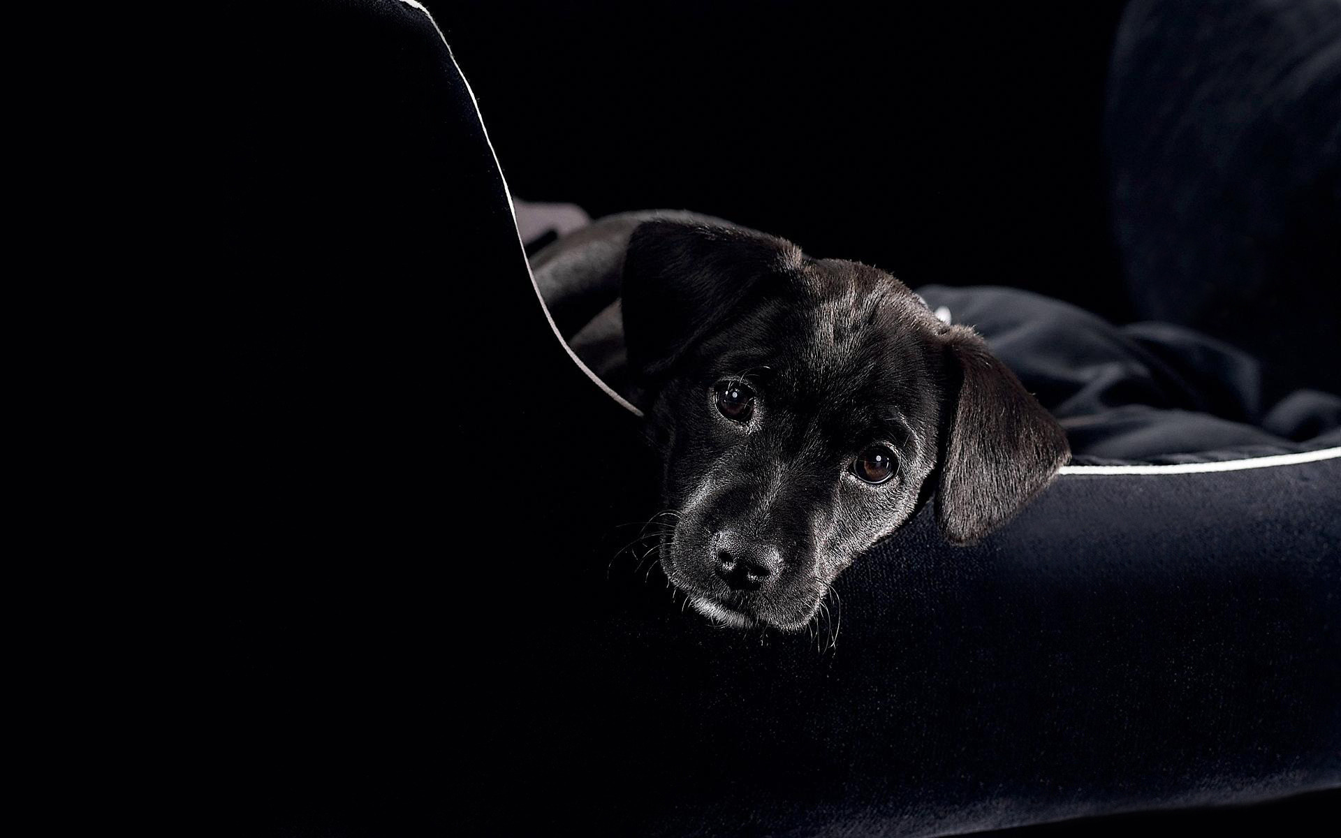 Черно-белый пес на полу  № 1157294 бесплатно