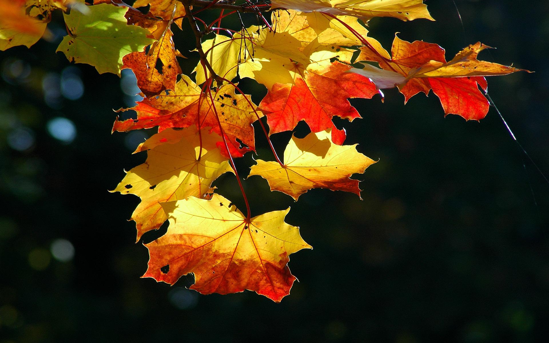 осень, деревья, листва, листопад загрузить