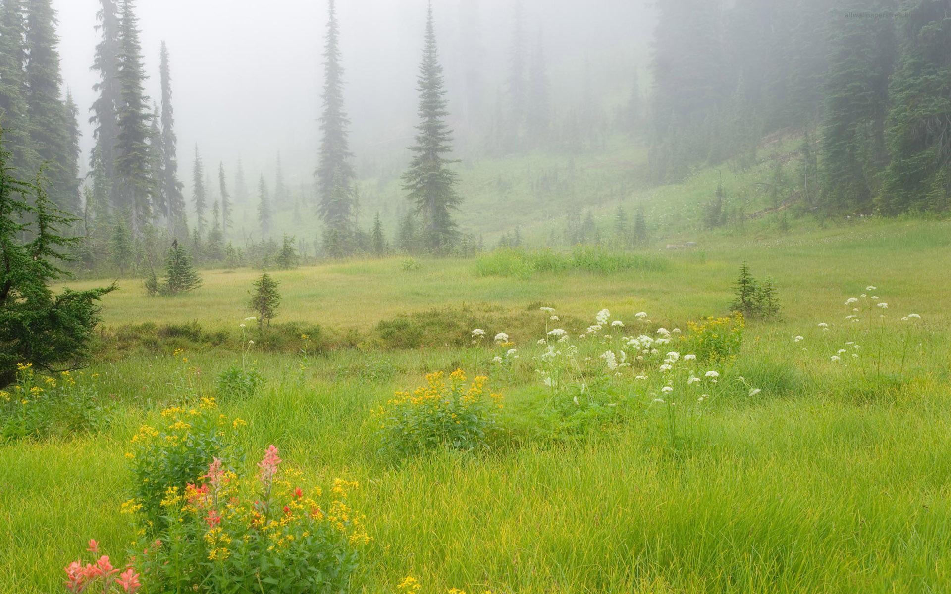 горы, ели, цветочная поляна  № 3587044 без смс