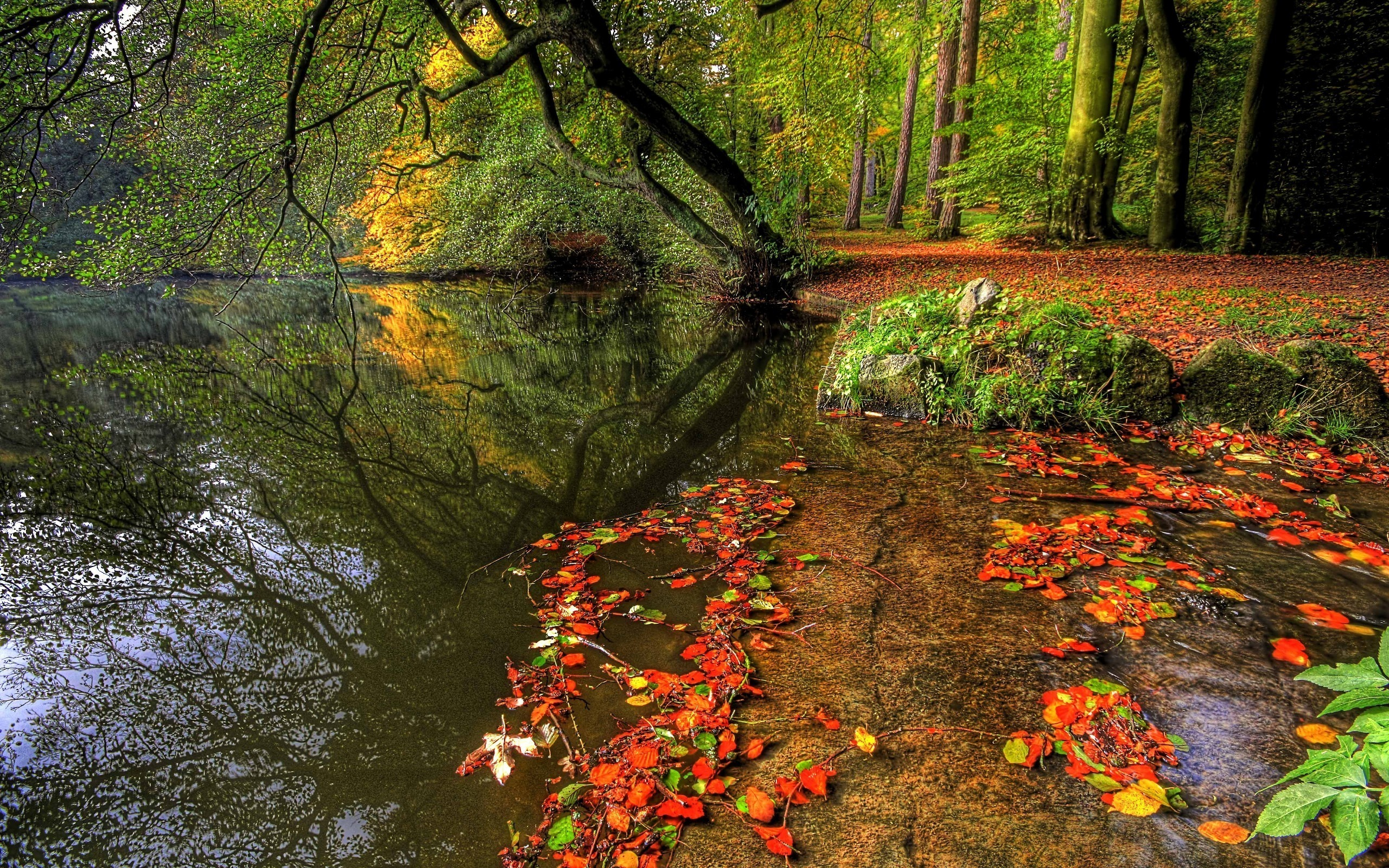 трава тропинка осень без смс