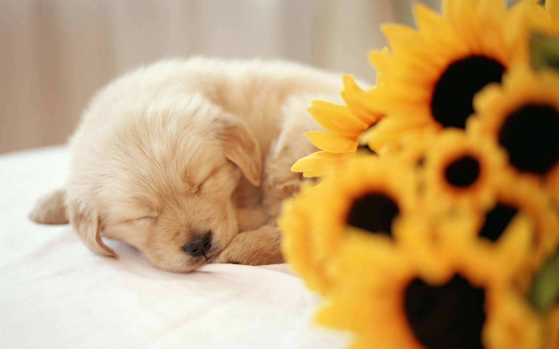 puppy wallpapers full hd wallpaper search