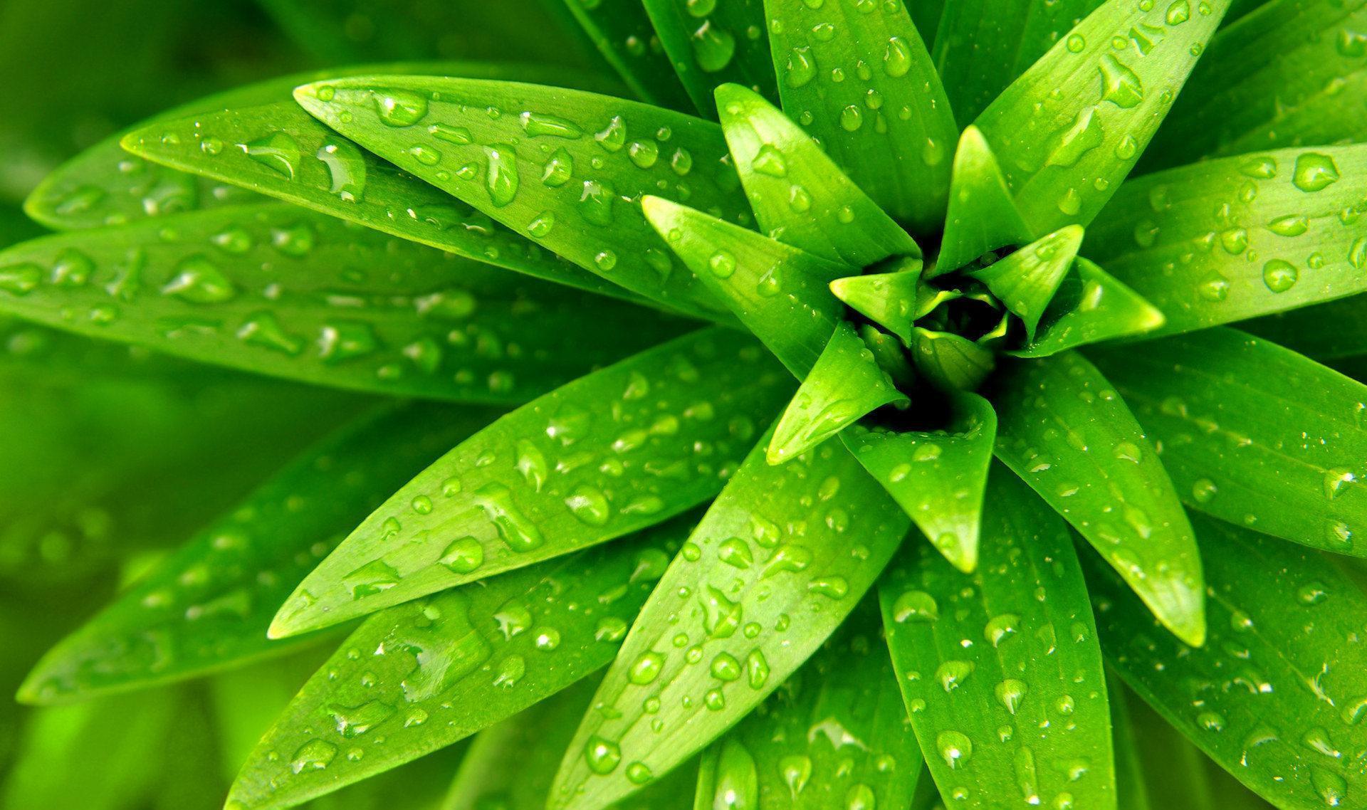 цветы, разноцветие, зелень загрузить