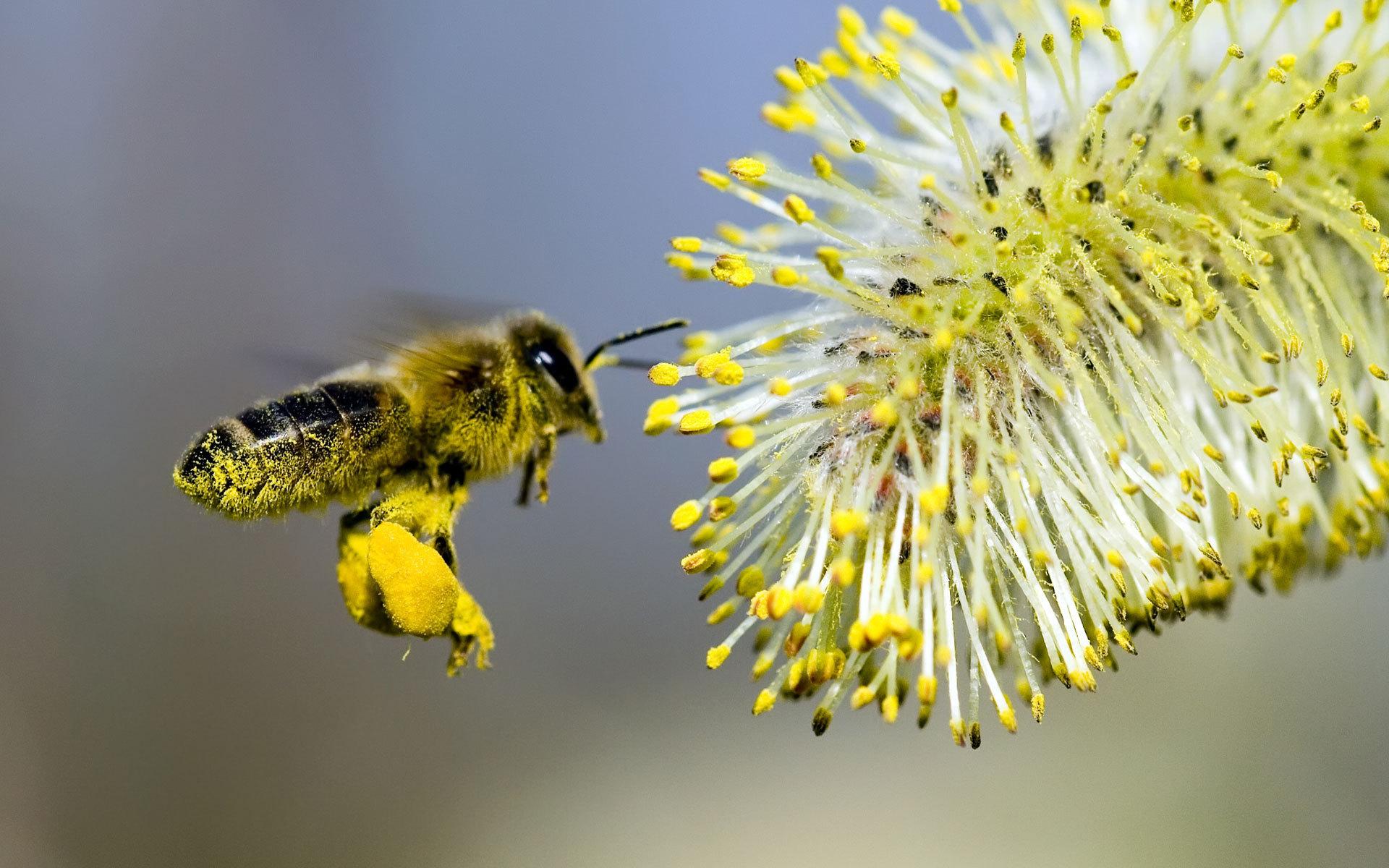 дарить картинка как пчела опыляет цветок раз надо