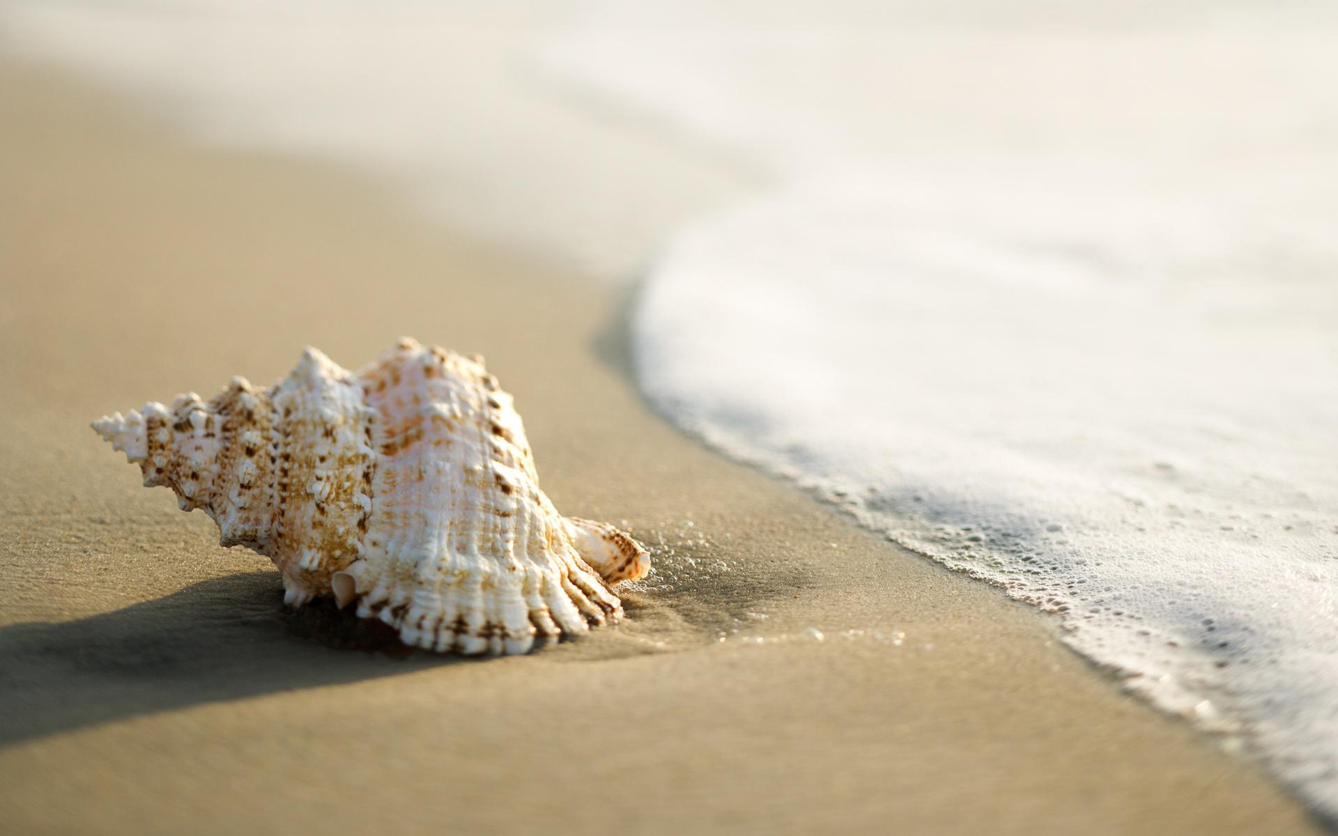 ракушка shell  № 248891 без смс