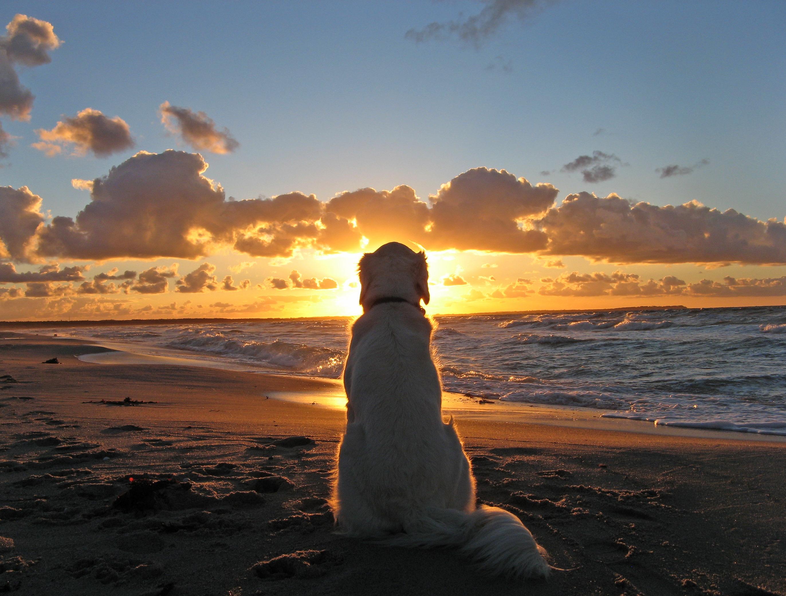 Фото меня на берегу моря вариант