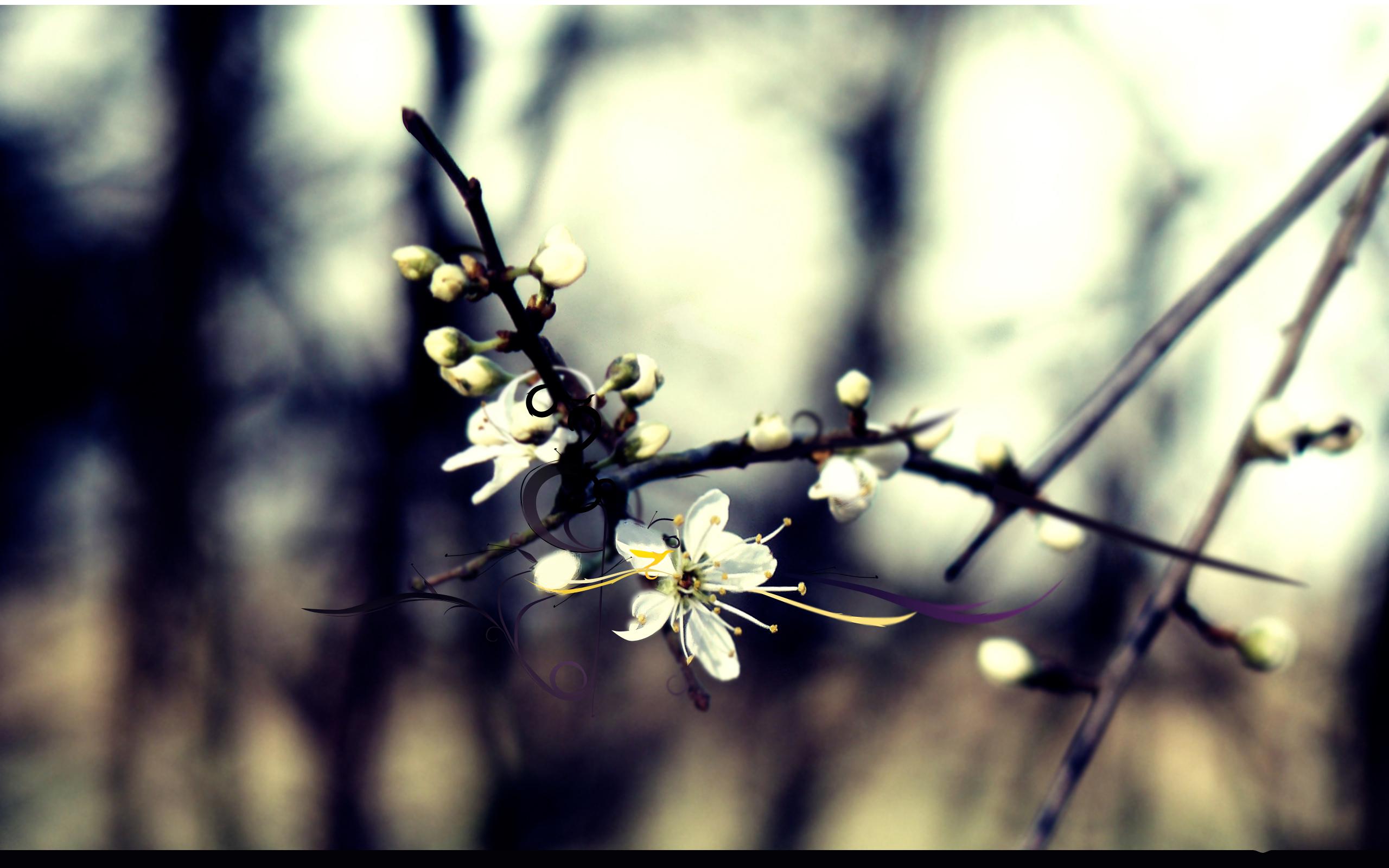 природа ветки белые цветы скачать