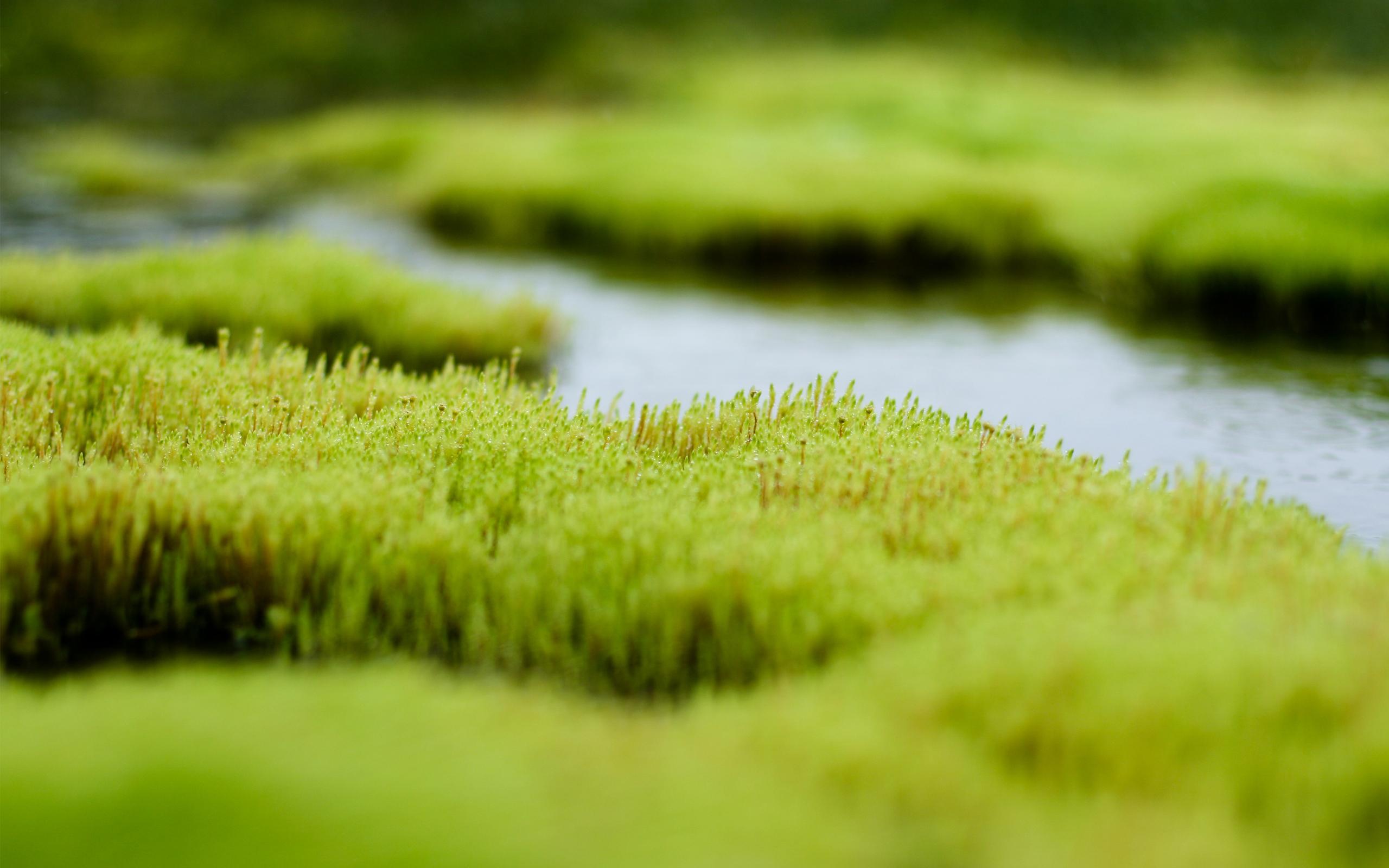 природа вода река трава деревья мох  № 3800851  скачать