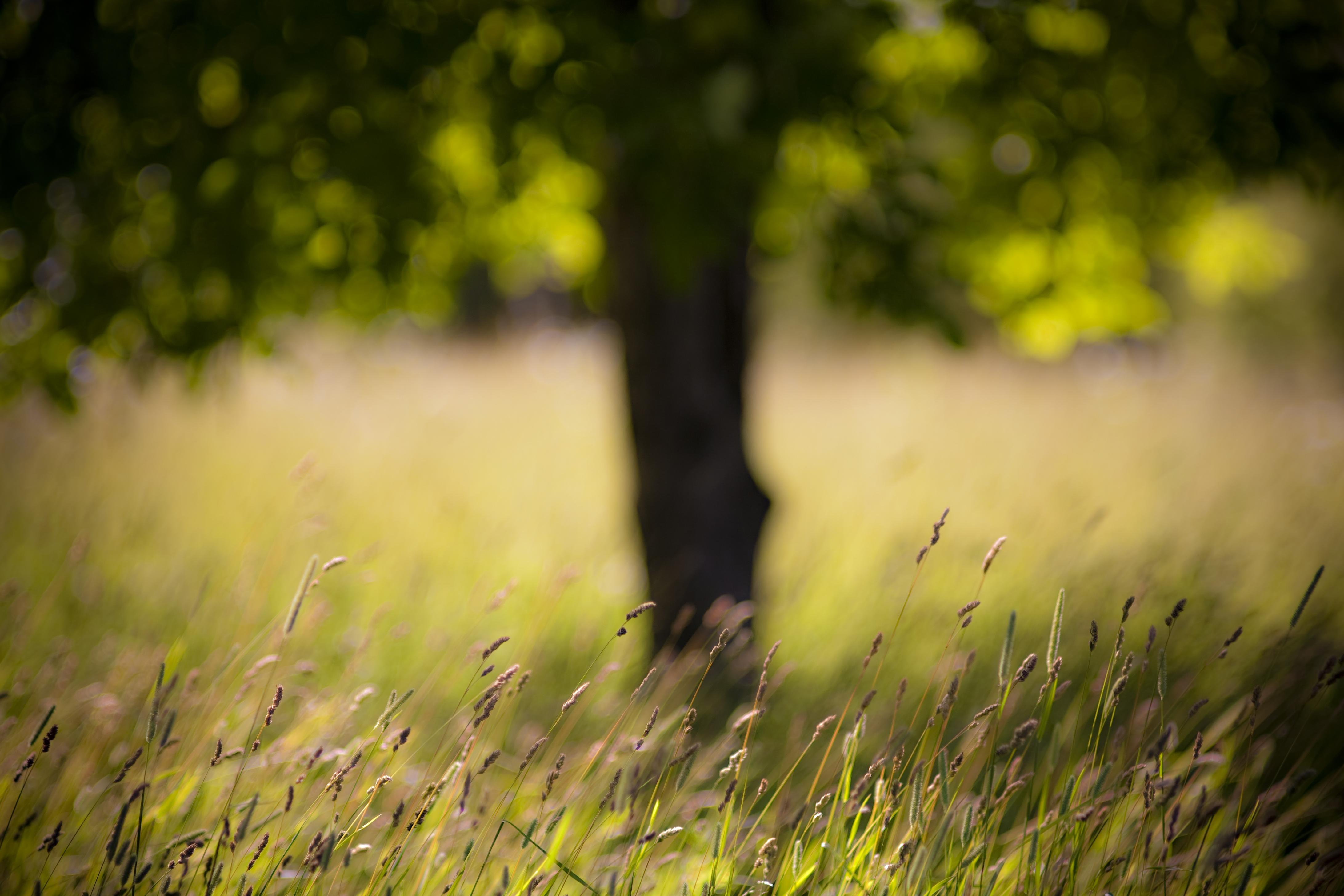 трава дерево поле  № 809745 бесплатно