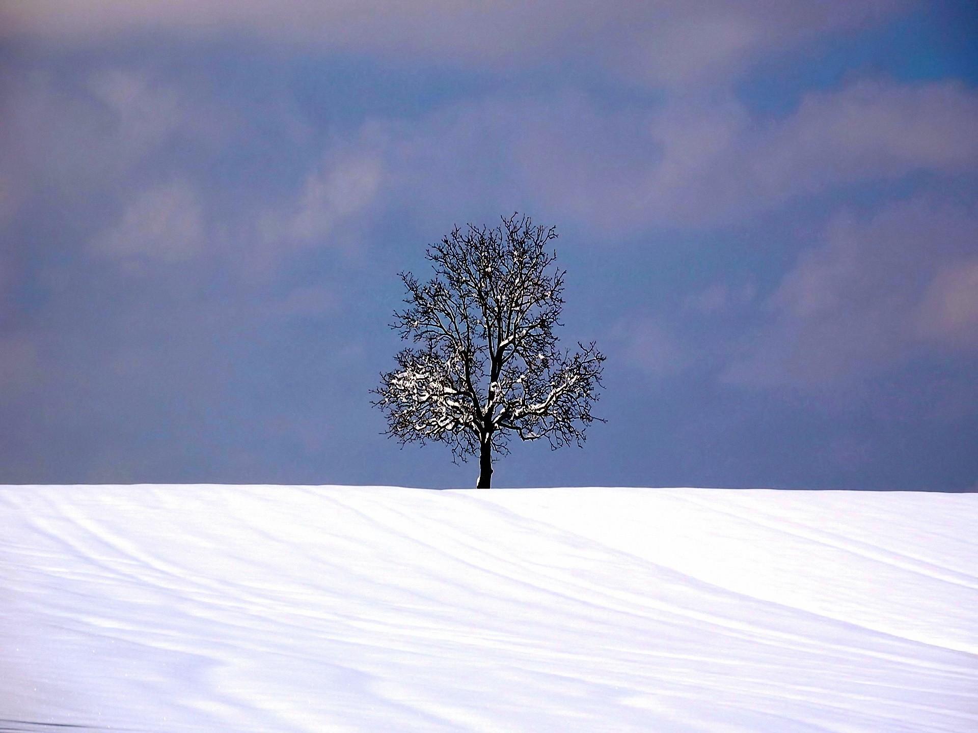 ши-на картинка дерево зимой без снега как-то ненавязчиво