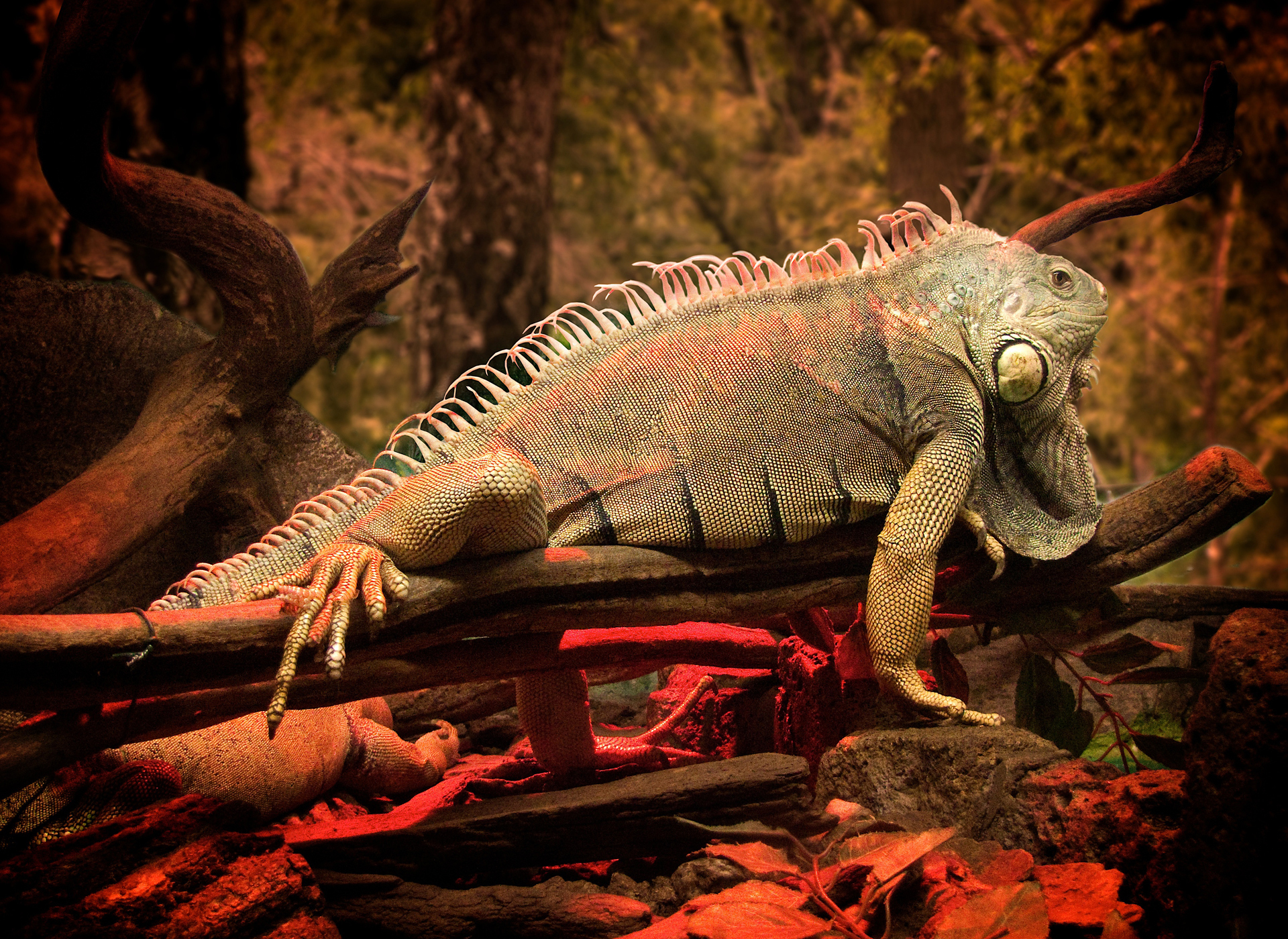 природа животные рептилия  № 234939 загрузить