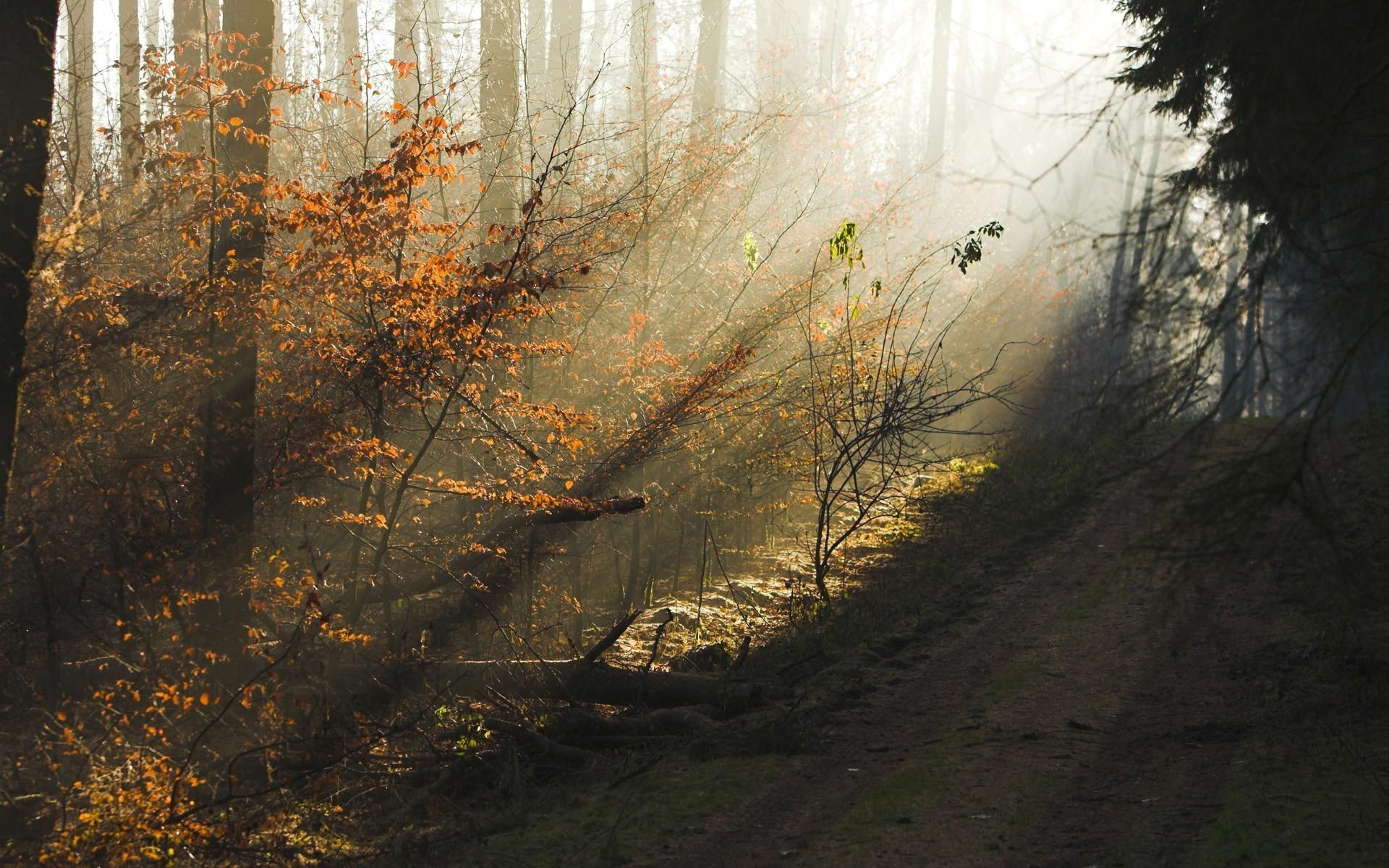 Лучи солнца в осеннем лесу скачать